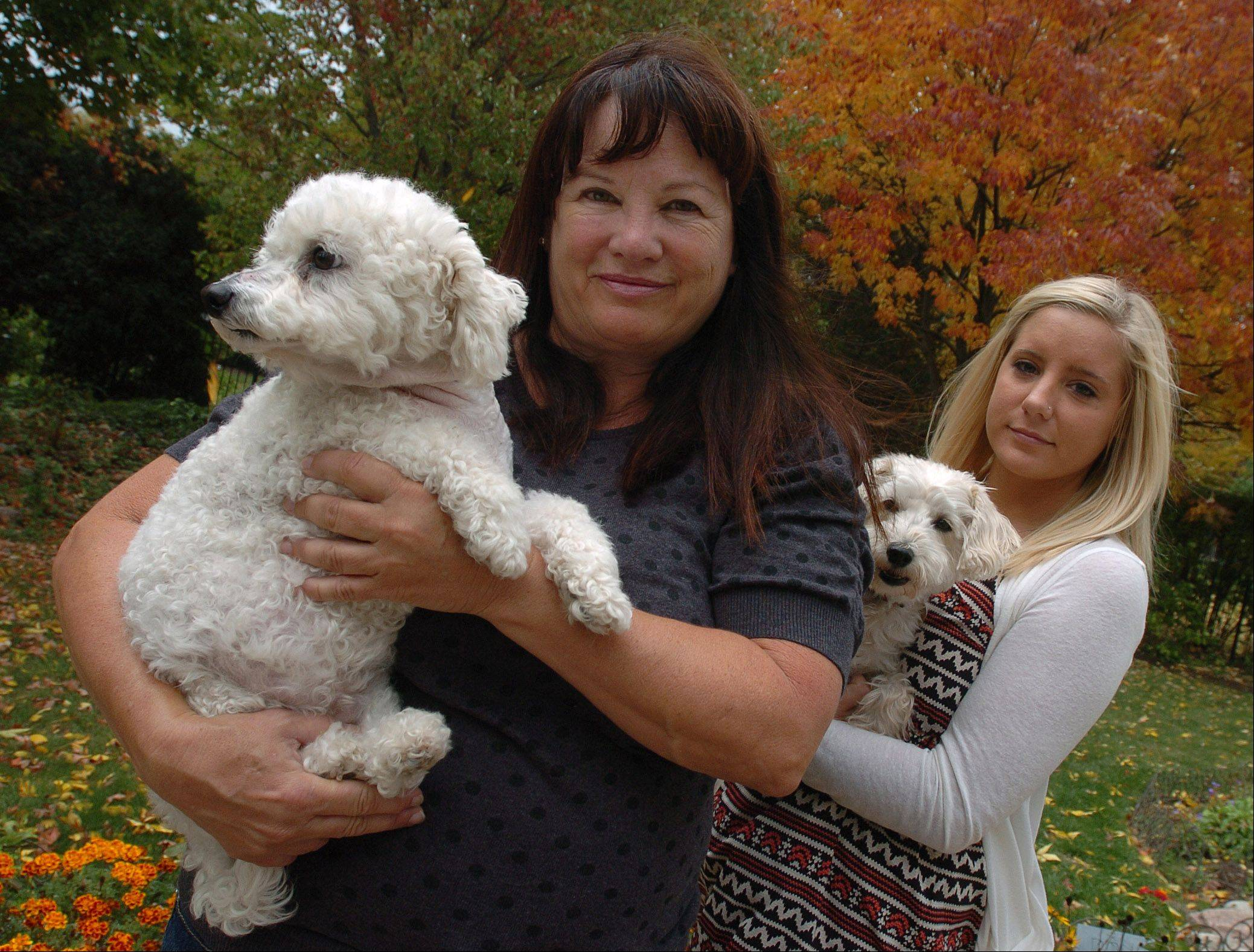 Linda Arigi of Wheaton holds her dog Evie, who recently was attacked by a coyote in her backyard and suffered several puncture wounds. Evie was saved by the quick response of dog sitter Megan Wilt, holding the family's other dog, Pippin.