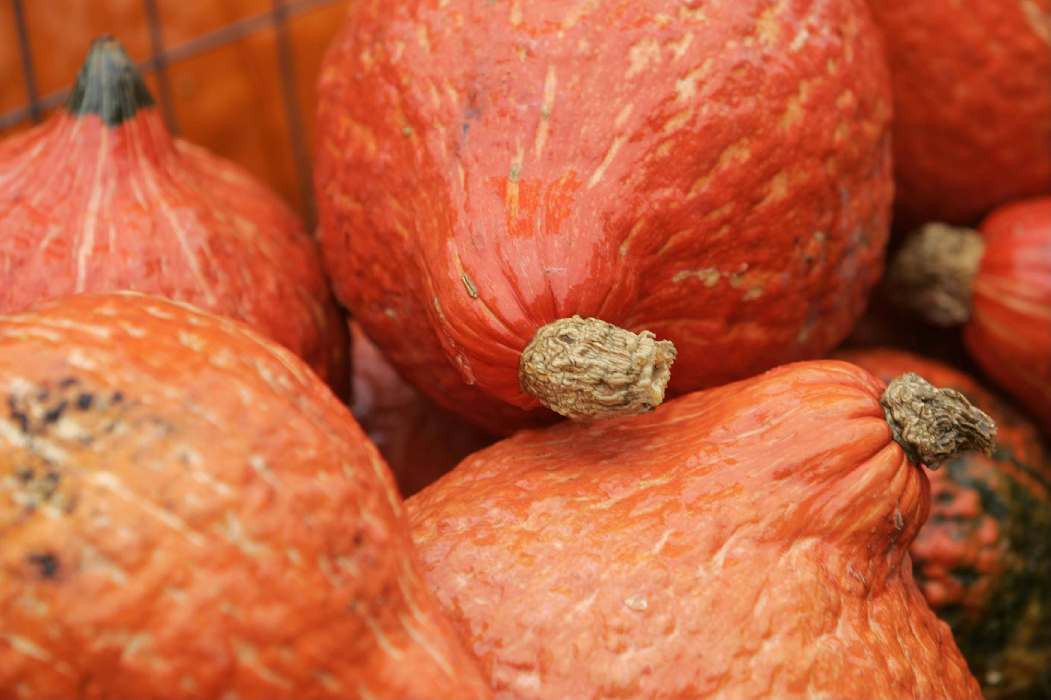 Hubbard squash at Randy's Vegetables, on Randall Road just north of I-90.