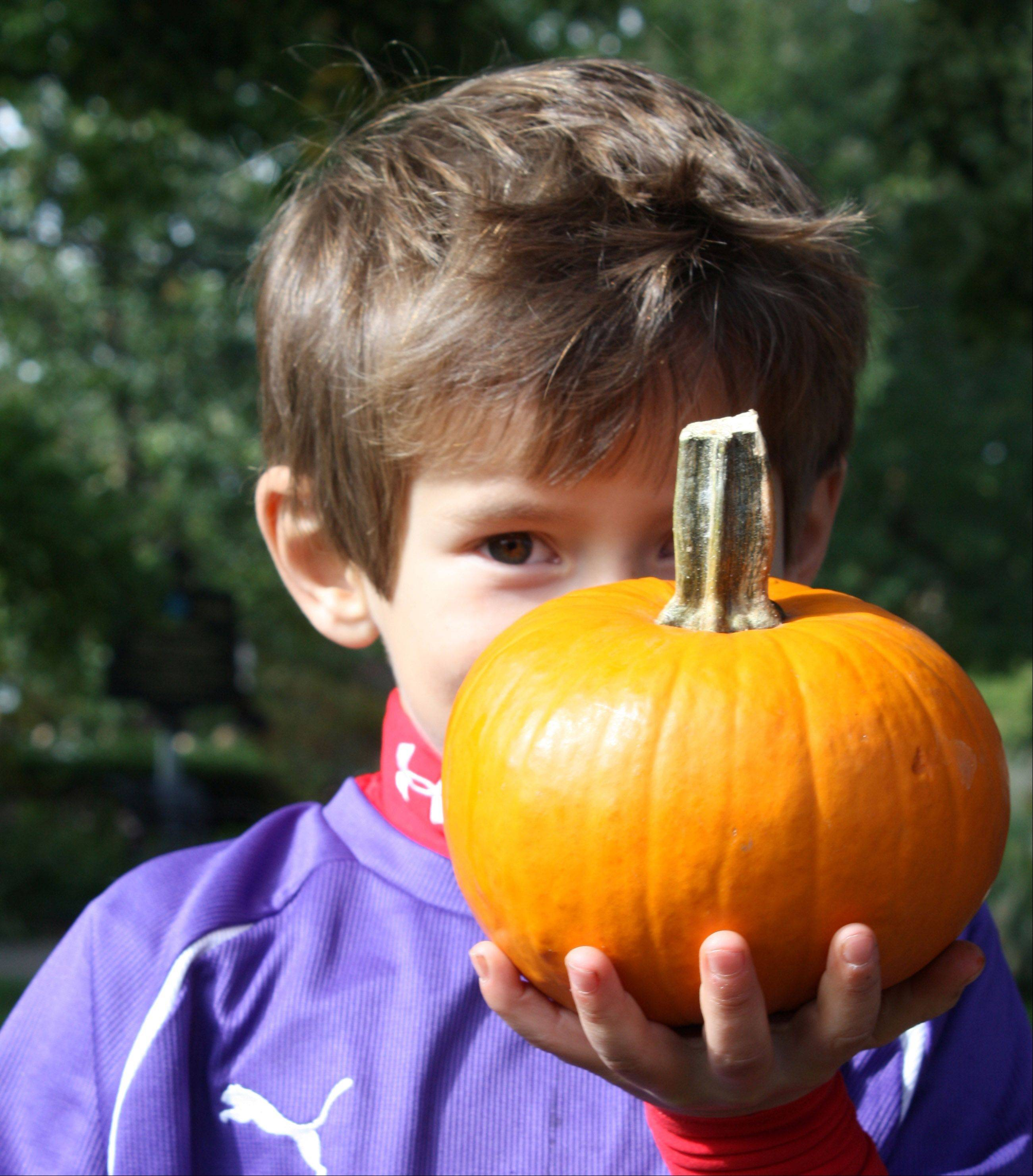 PumpkinFest, presented by the Libertyville Junior Woman's Club, is Saturday, Oct. 13, with plenty of pumpkins for children.
