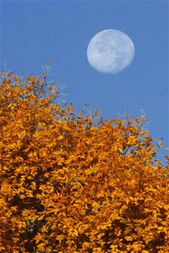 The moon sets over central Illinois trees showing their fall colors. Fall started last week and the leaves are trying to catch up. The Iowa Department of Natural Resources says the drought and heat caused some trees to lose their leaves early. But now with cooler temperatures, the fall colors could last through October.