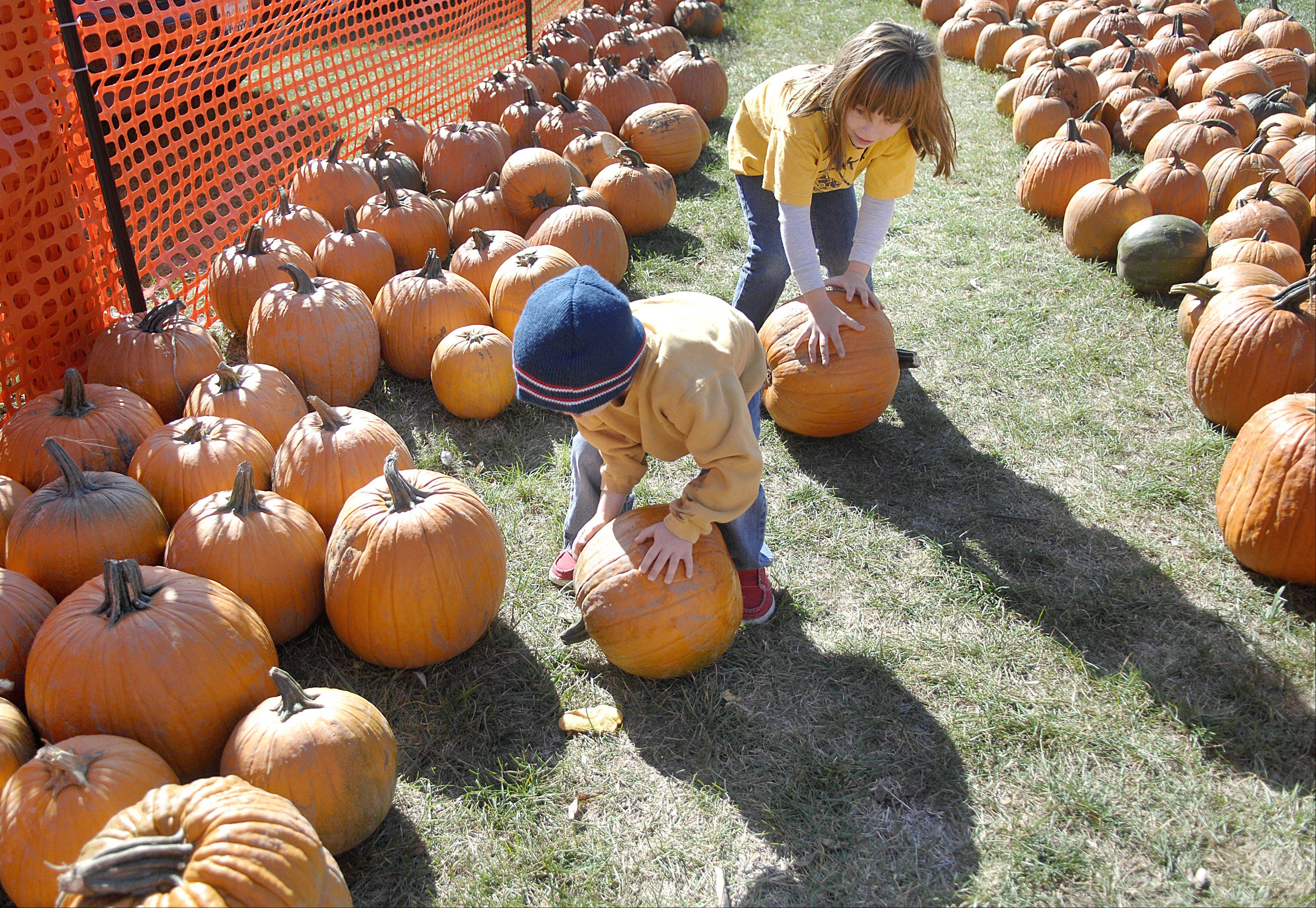Angelo Sprovieri, 4, and sister Annabell, 6, roll pumpkins in the patch at South Elgin�s annual Pumpkin Patch and Fall Festival on Saturday. This was the third year the Sprovieri family has attended the event.