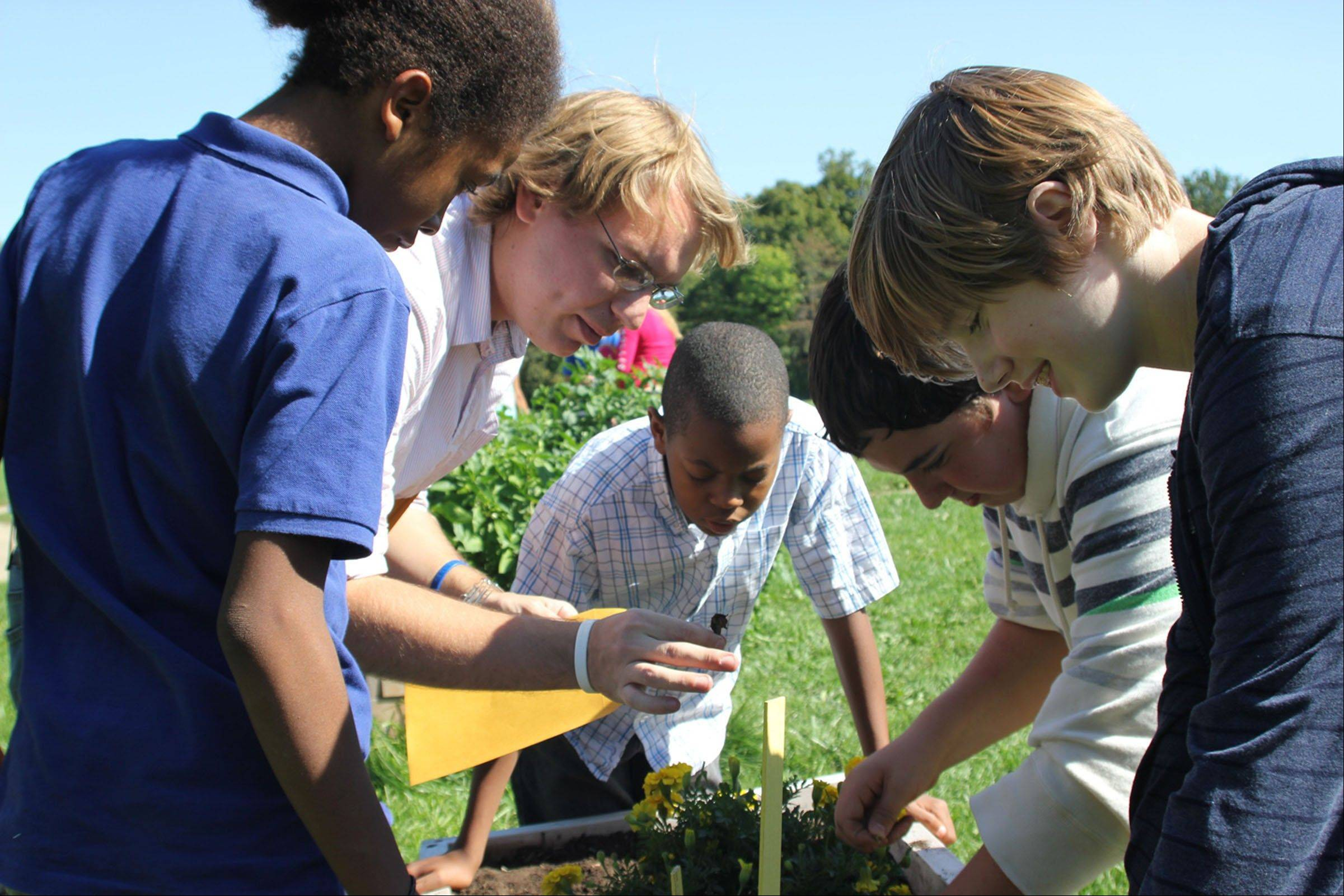 Teacher Jarrod Neuhaus, second from left, instructs a group of students in the proper method for harvesting marigold seeds at Garfield Montessori School in Decatur.