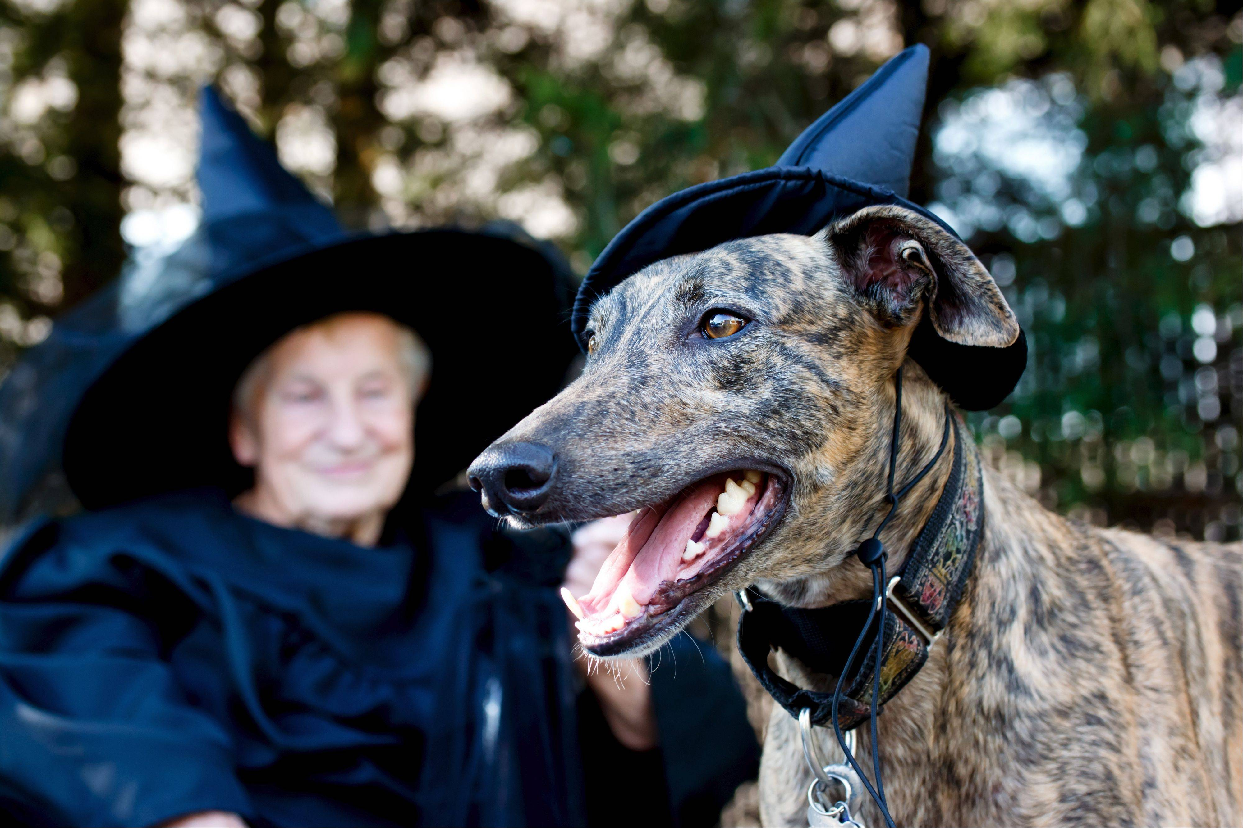 Take your dog along to do some ghost investigating in Aurora and Naperville as part of the Ghost Tails Dog Walk and Ghost Tour.