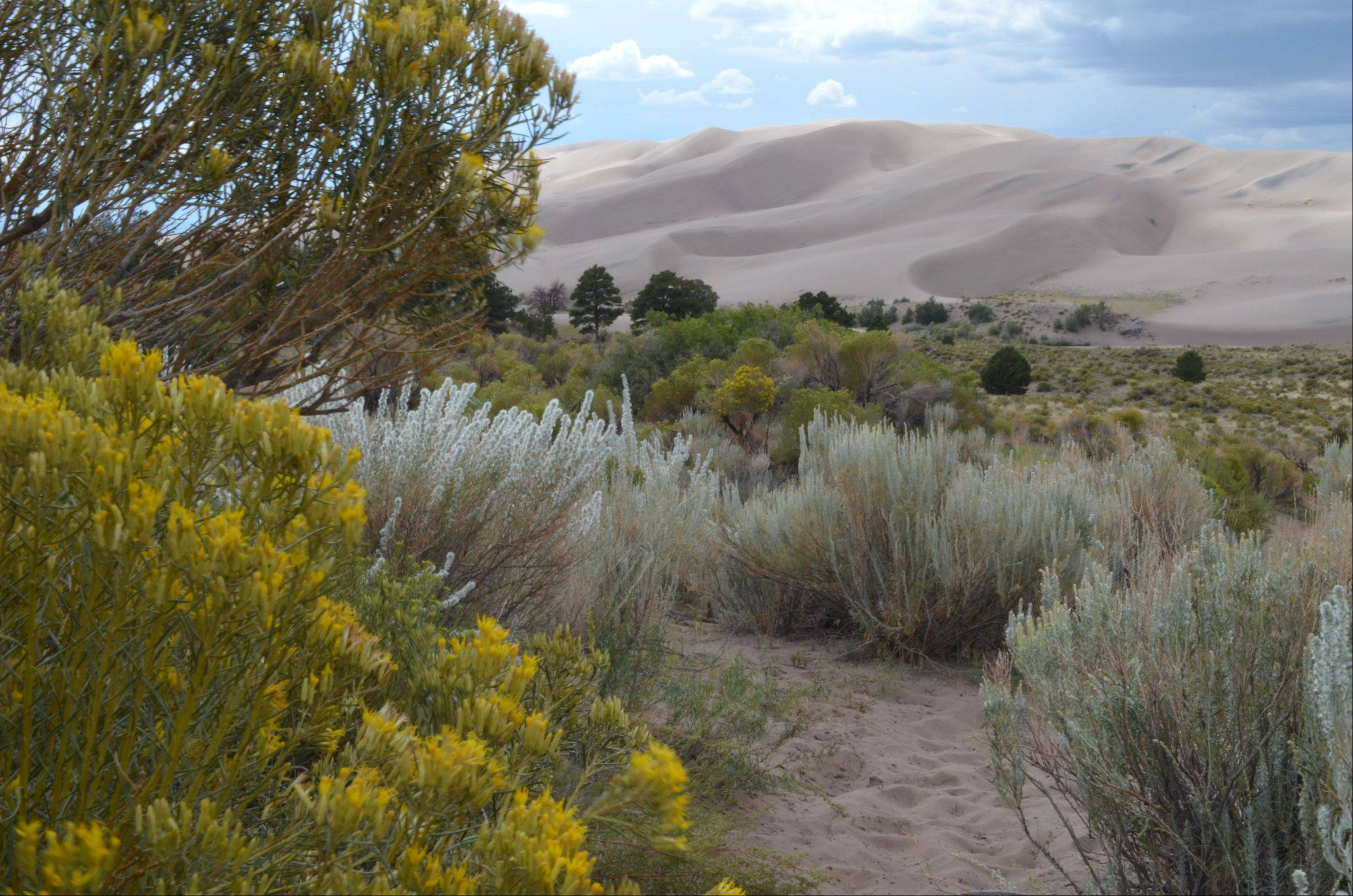 This is from our annual Daddy/Daughter camping trip. It was taken at a spot called the Sand Pit at Great Sand Dunes National Park on August 23, 2012.