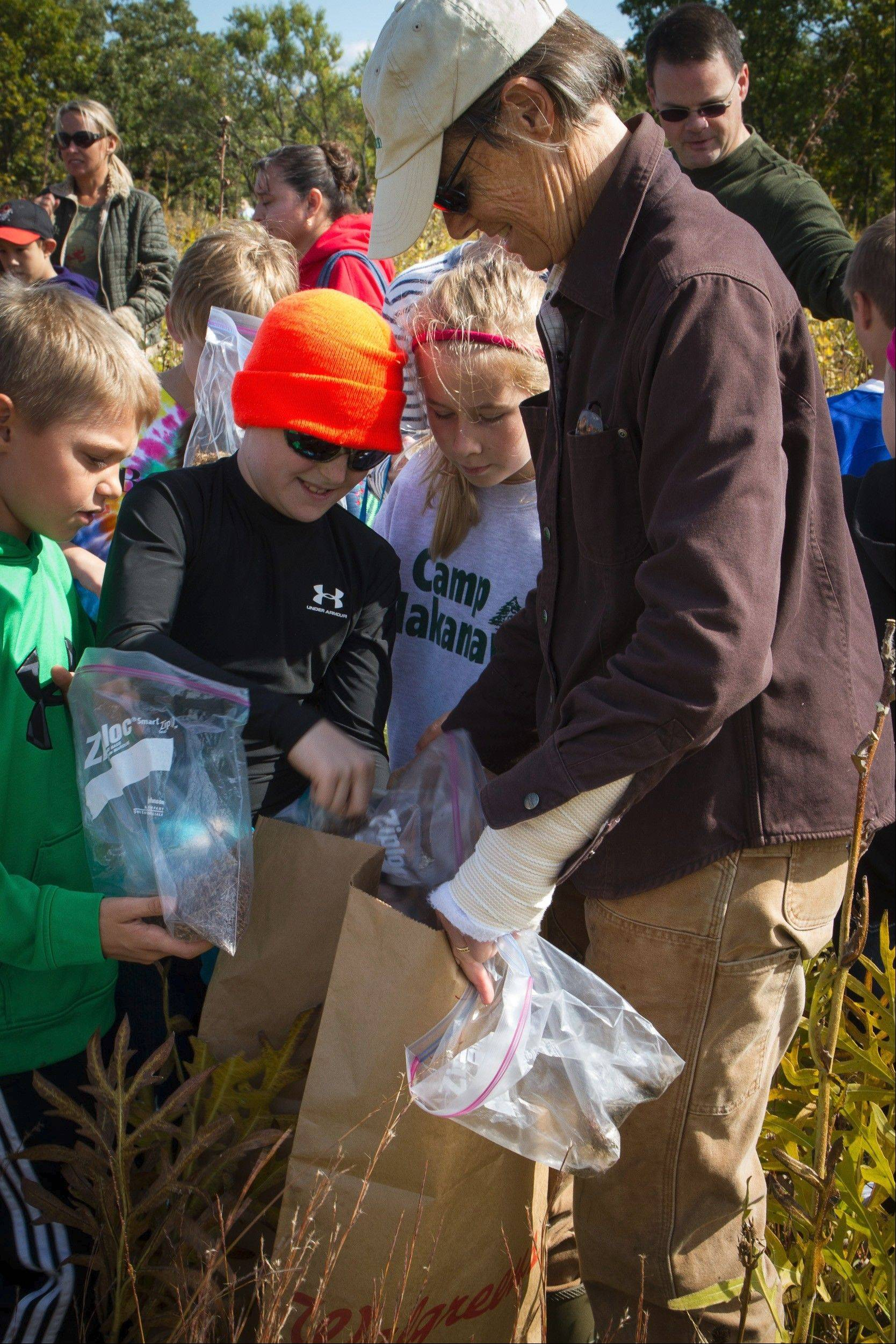 Wendy Paulson helps fourth-graders empty their bags of big blue stem seed into larger bags of the seed that will be processed by Citizens for Conservation volunteers and used in a number of major prairie restorations in the greater Barrington area.