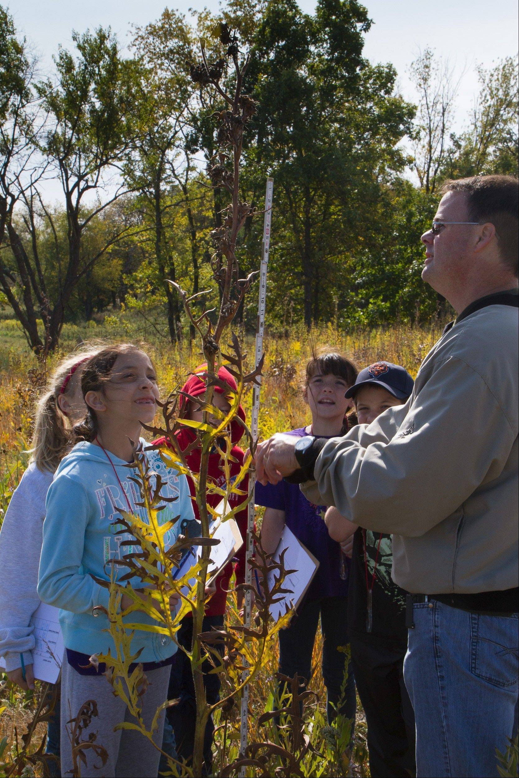 Fourth-graders from Barrington District 220 measure native plants on the prairie.
