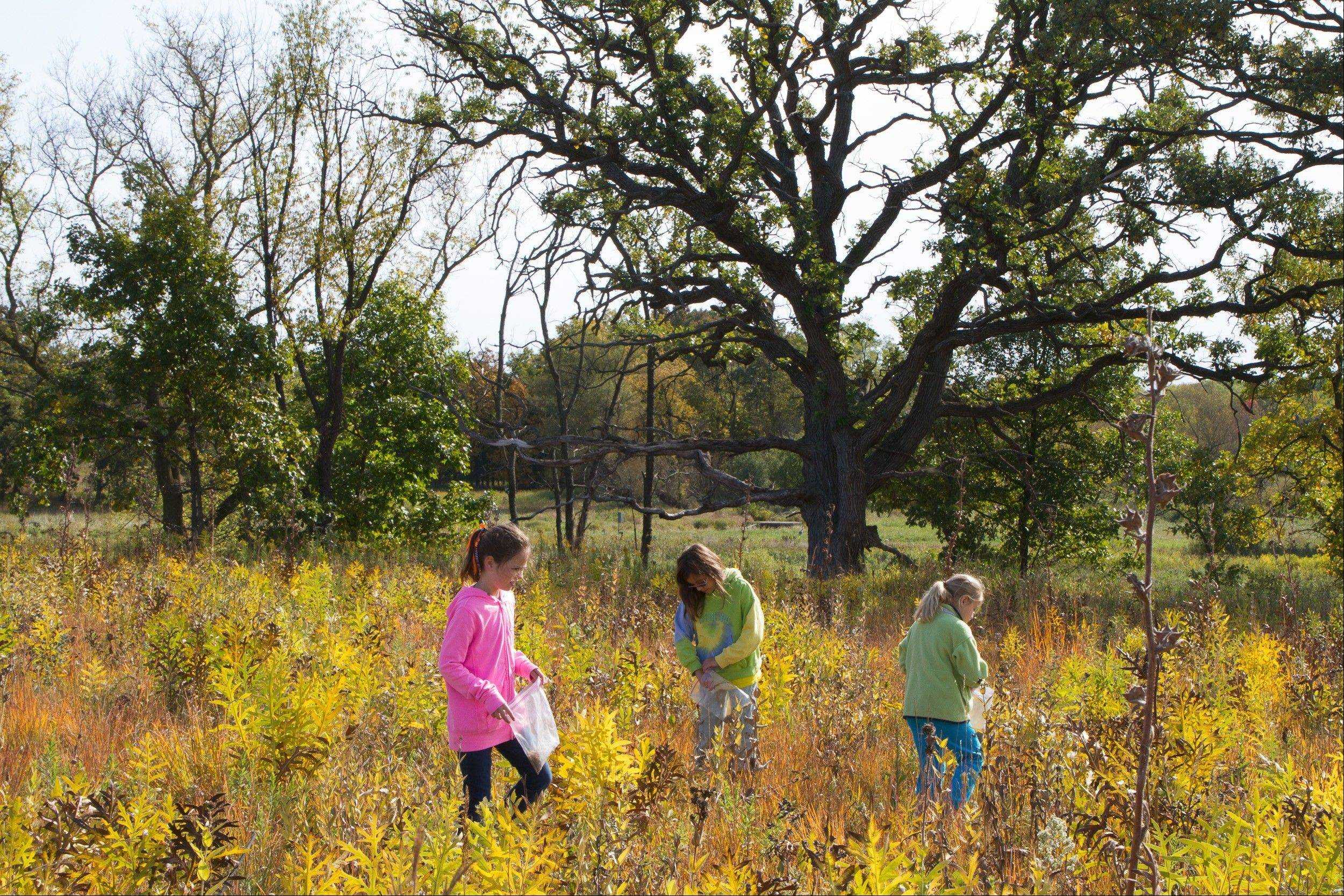 Barrington District 220 fourth-graders take a discovery hike, one of their favorite parts of the prairie preservation field experience.