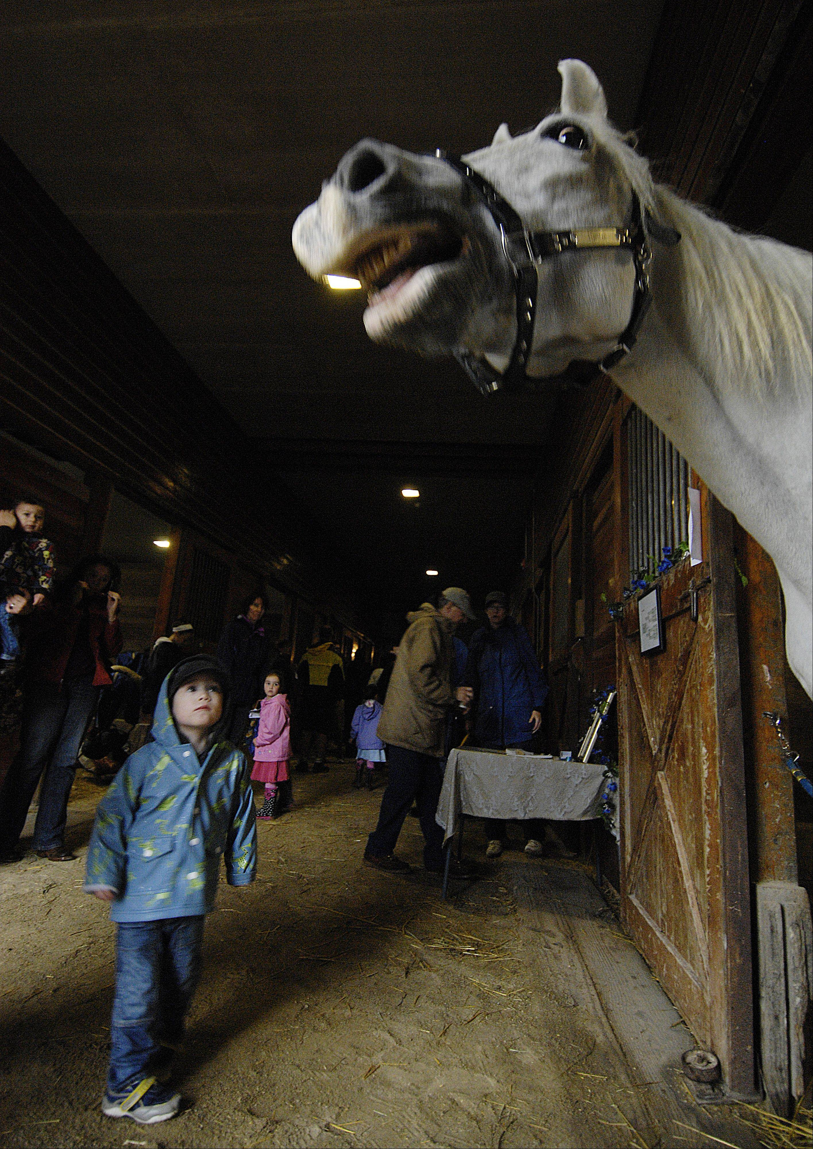 Kieran Quealy, 3, of Westmont listens as Ilustre neighs in a stable during the Forest Preserve District of DuPage County's annual Danada Fall Festival Sunday in Wheaton.