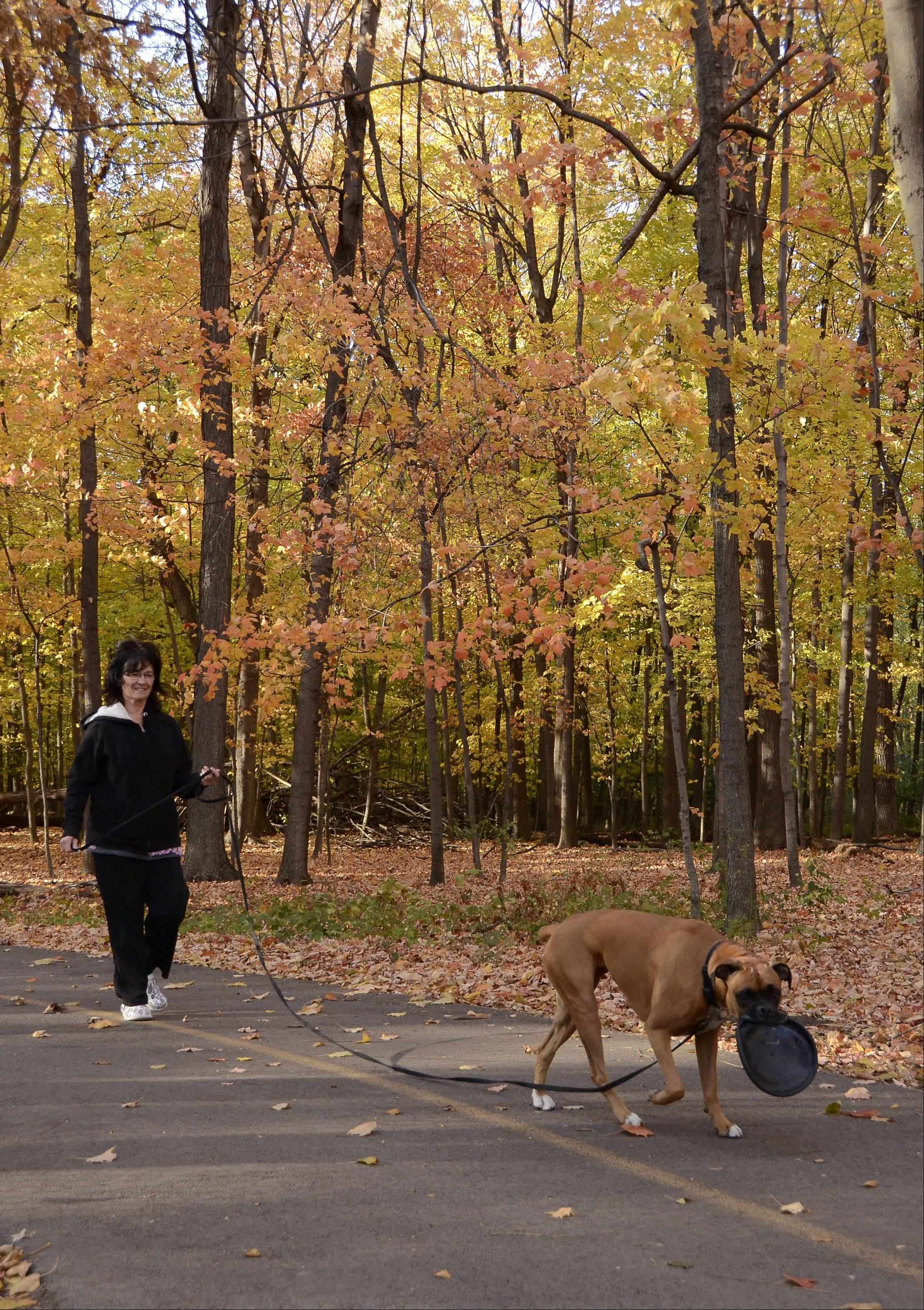 Gail Koelle and her boxer Misha enjoy a stroll in Busse Woods on a balmy autumn afternoon.