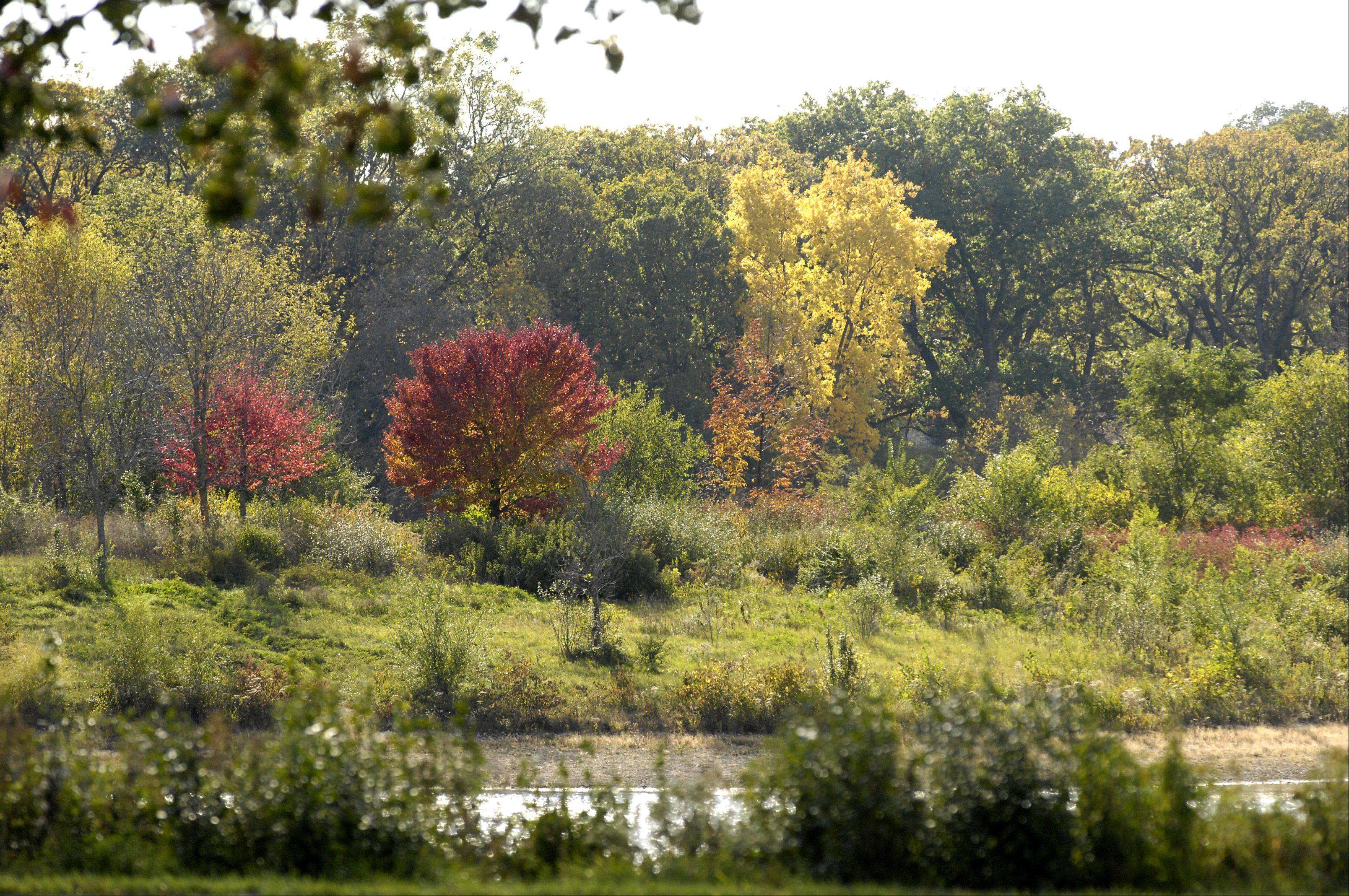 Trees in the Blackwell Forest Preserve are starting to turn color.