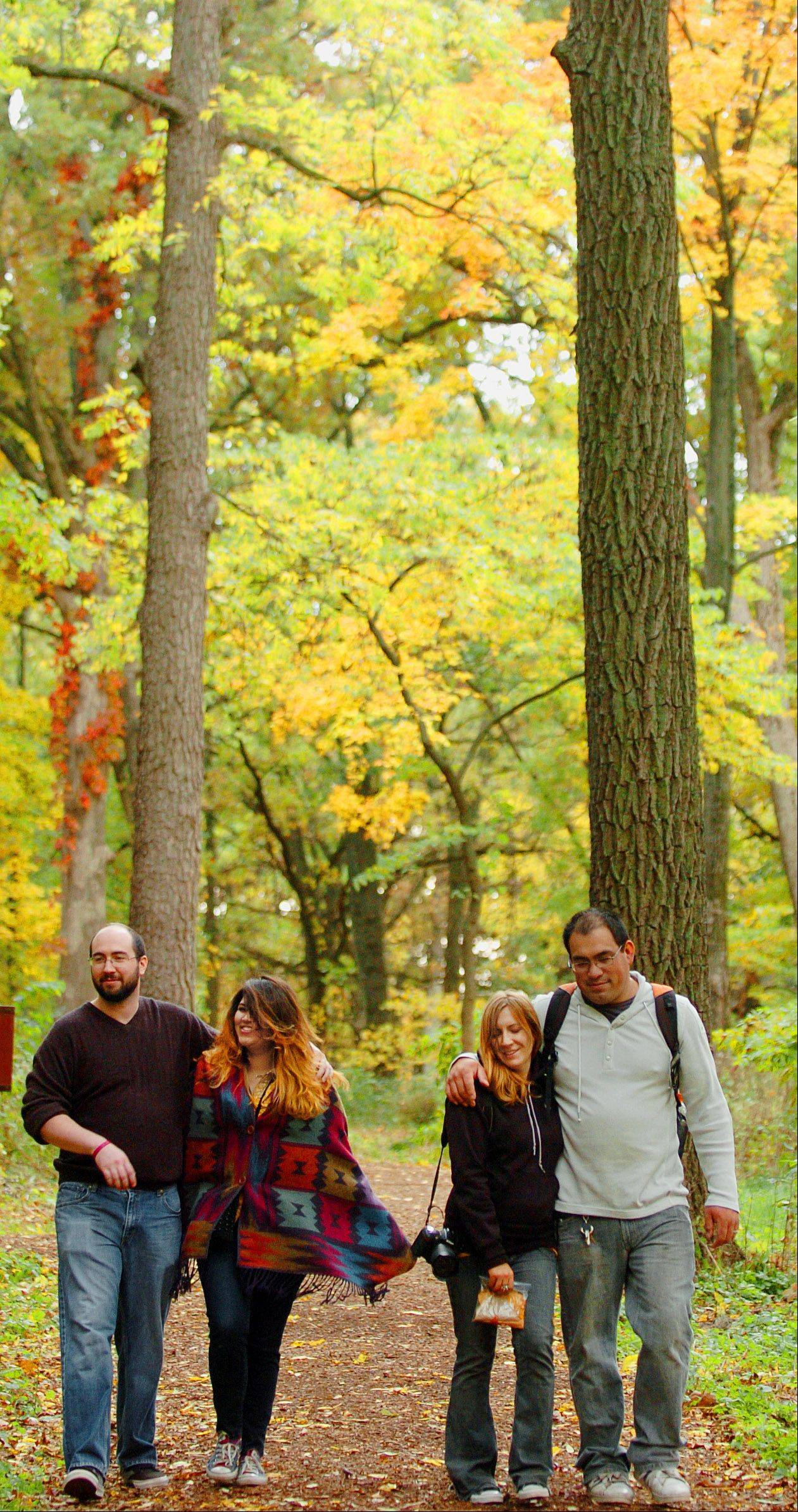 Jeremy Bennett, left, of Schaumburg and Polett Jasso of Chicago walk with Kristen Olivares and Steve Olivares both of Streamwood on a recent walk through the Morton Arboretum in Lisle. Peak color is expected to be some time late next week.