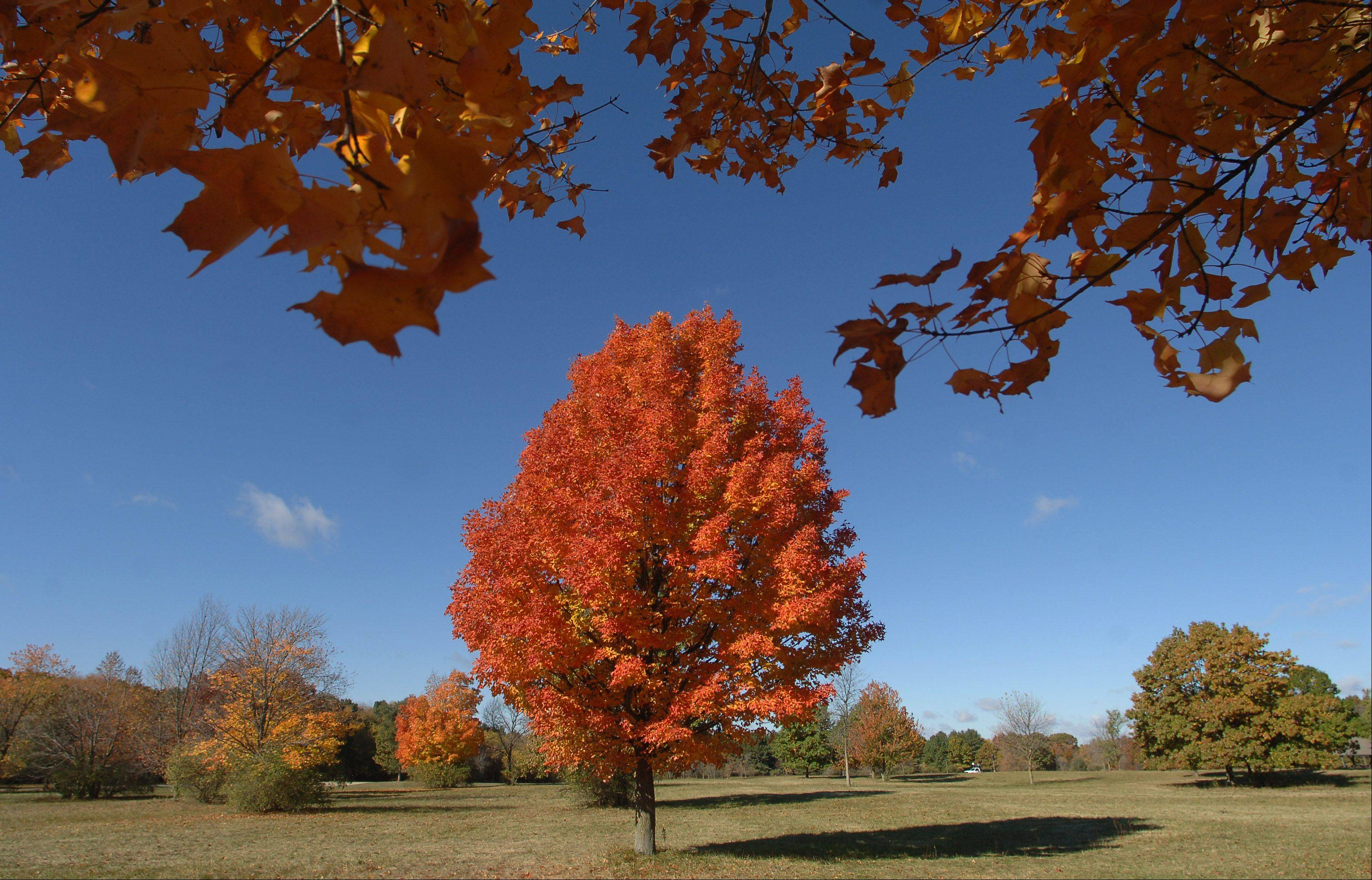 Trees in the Lakewood Forest Preserve near Wauconda show off their fall splendor.