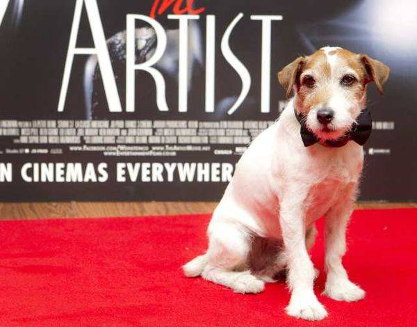"Meet Uggie, the Jack Russell terrier star of the Academy Award-winning film ""The Artist,"" as he and his trainer, Omar Von Muller, read from and autograph copies of their new book, ""Uggie, My Story,"" at Anderson's Bookshop, 123 W. Jefferson Ave., Naperville."
