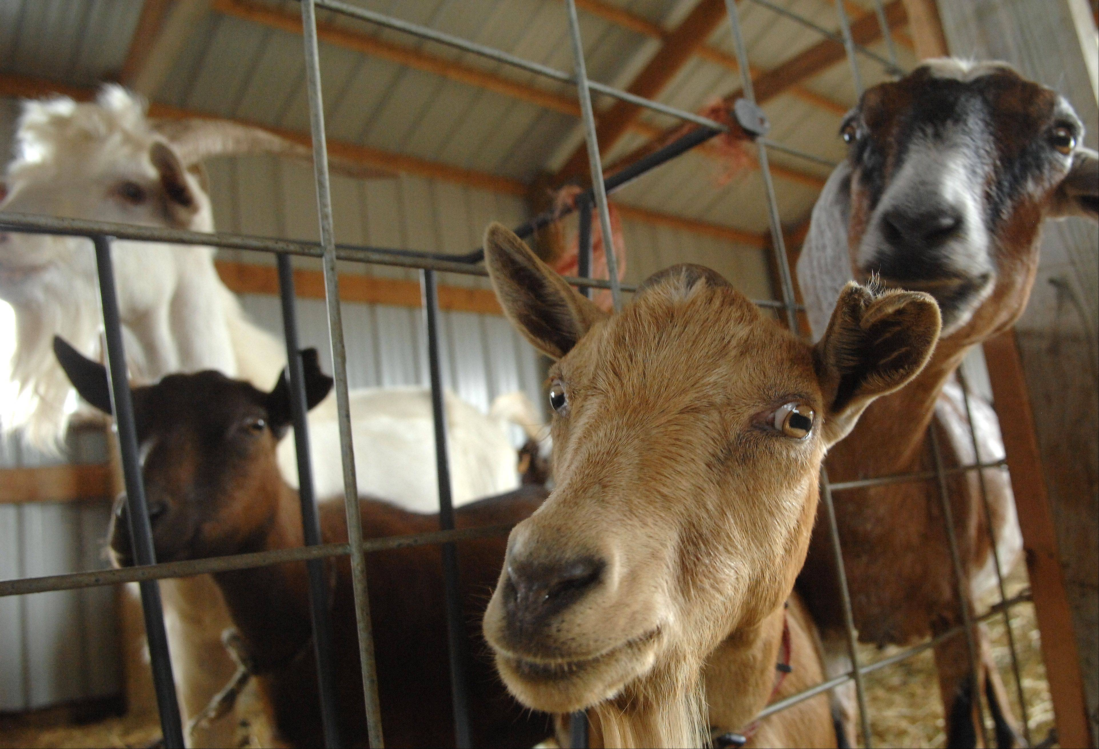 Autumn Drive visitors can check out the petting zoo at All Seasons Orchard in Woodstock.
