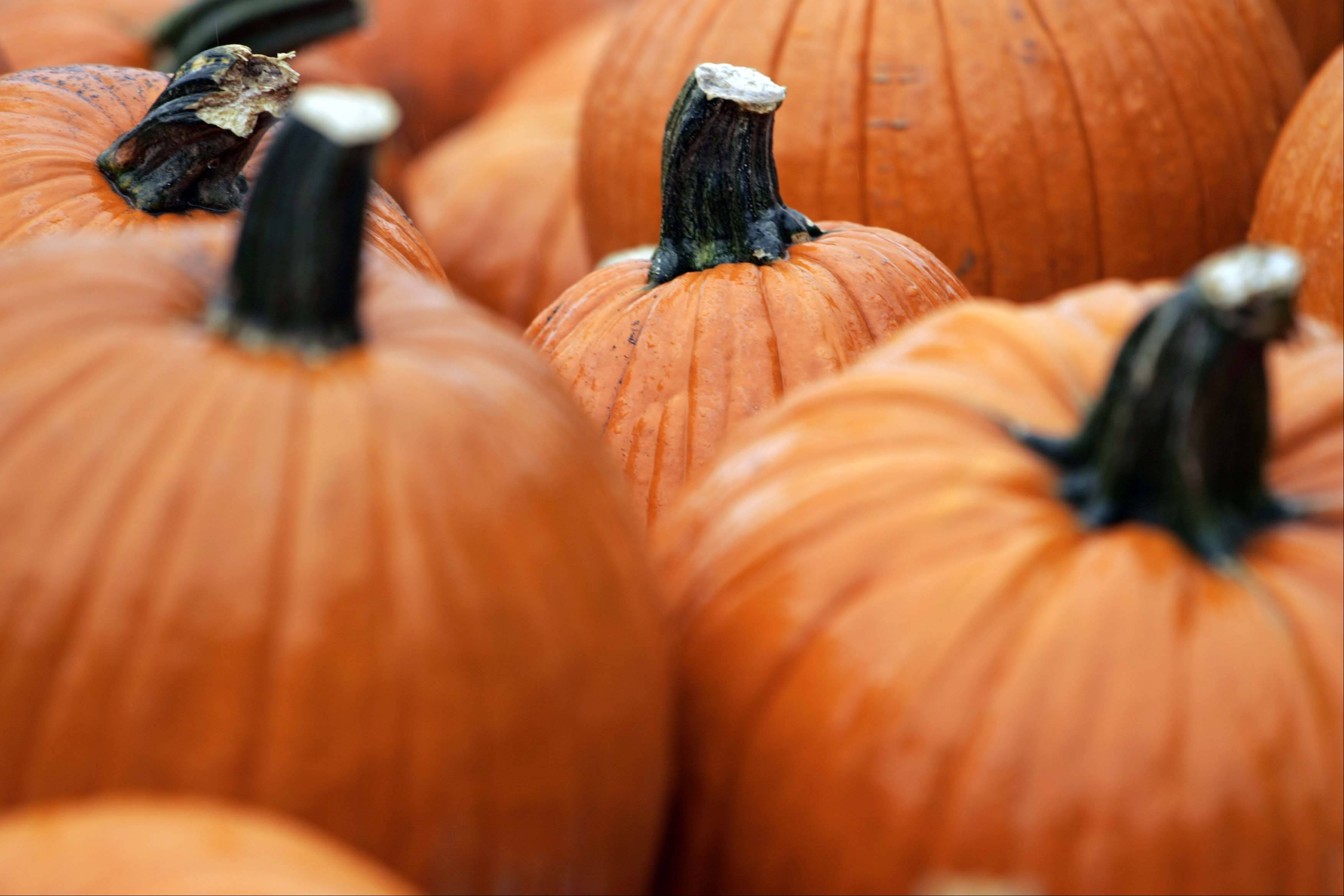 Pumpkins will be available at several stops along the Autumn Drive.