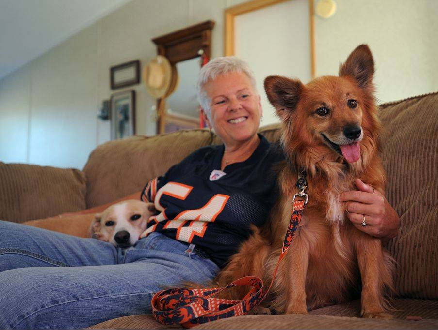 After years on the run in Oak Brook, the dog now known as Rusty Redd, right, has a home in Utah with former Lake Zurich resident Kristine Kowal and her old dog Maddy.