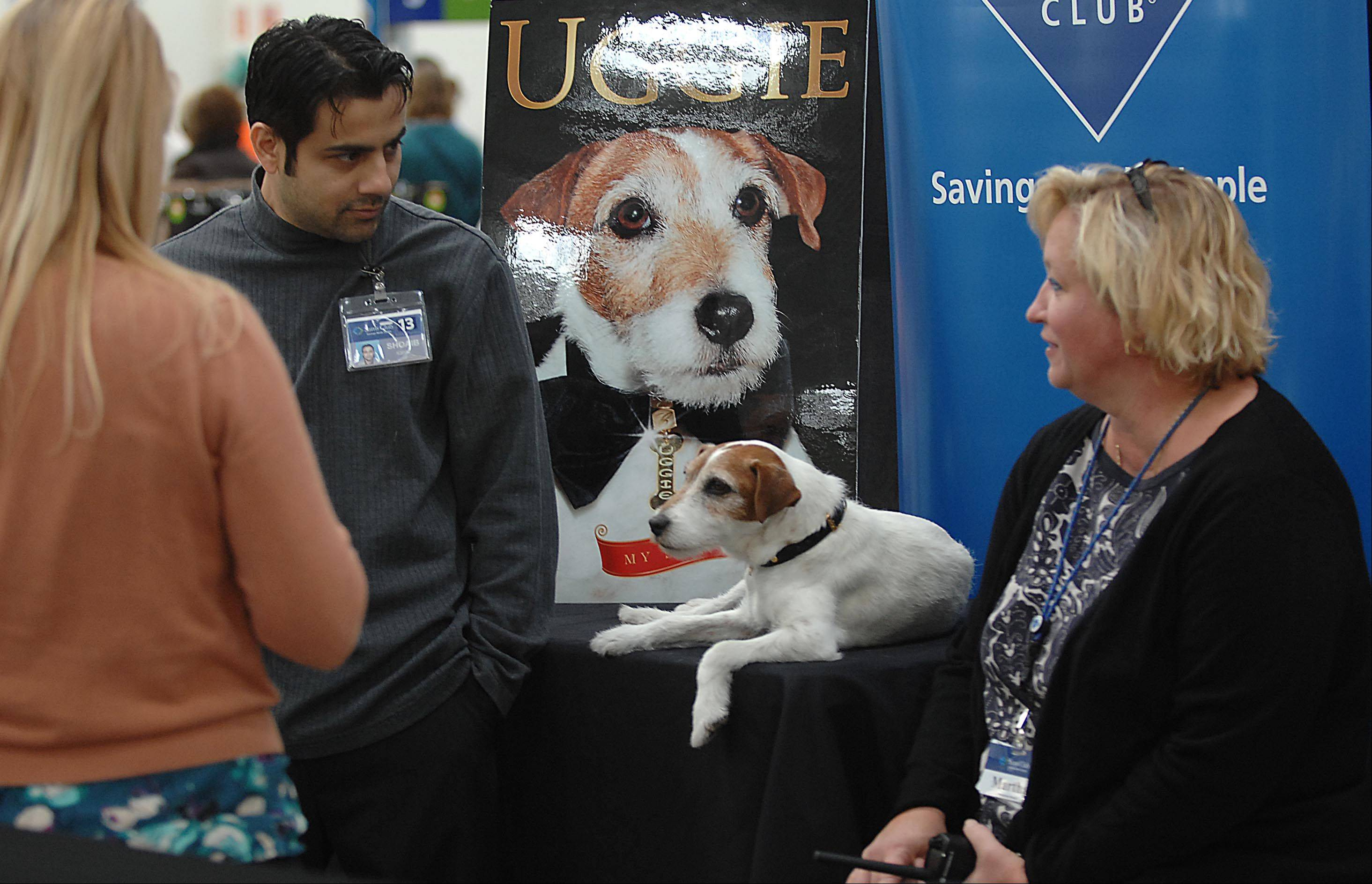 "Uggie, a 10-year-old Jack Russell terrier, has appeared in several commercials and films, including 2011 Academy Award winner ""The Artist."" He lounges Sunday at the Elgin Sams Club on Randall Road while waiting for his fans."
