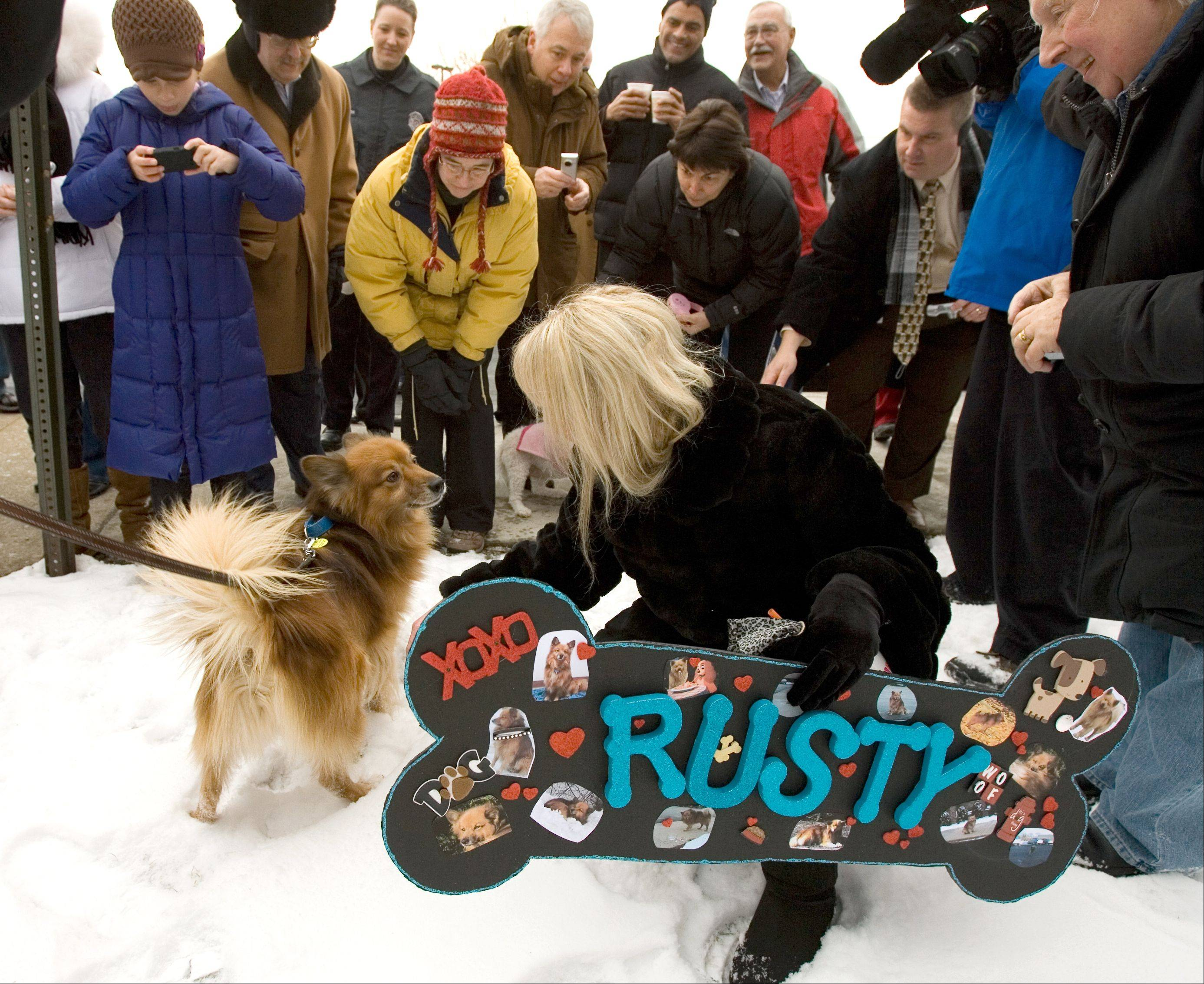 After three years of feeding Rusty in the parking lot near her Oak Brook office, Julie Gleason didn't get close enough to touch the stray dog until this send-off party in January 2011. Now Gleason keeps tabs on the beloved dog through almost daily Facebook entries from Rusty's new owner in Utah.