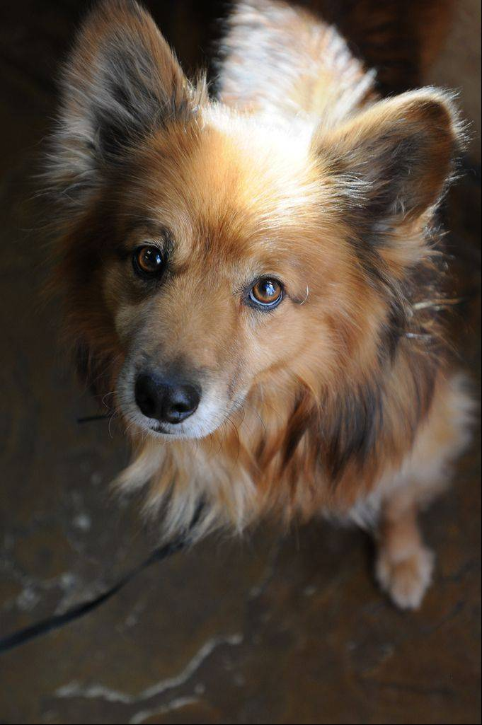 Something about Rusty's face just melts people's hearts, says Harry Peters, one of the Oak Brook residents who fed and cared for the stray dog for nearly three years before Rusty found a permanent home in Utah.