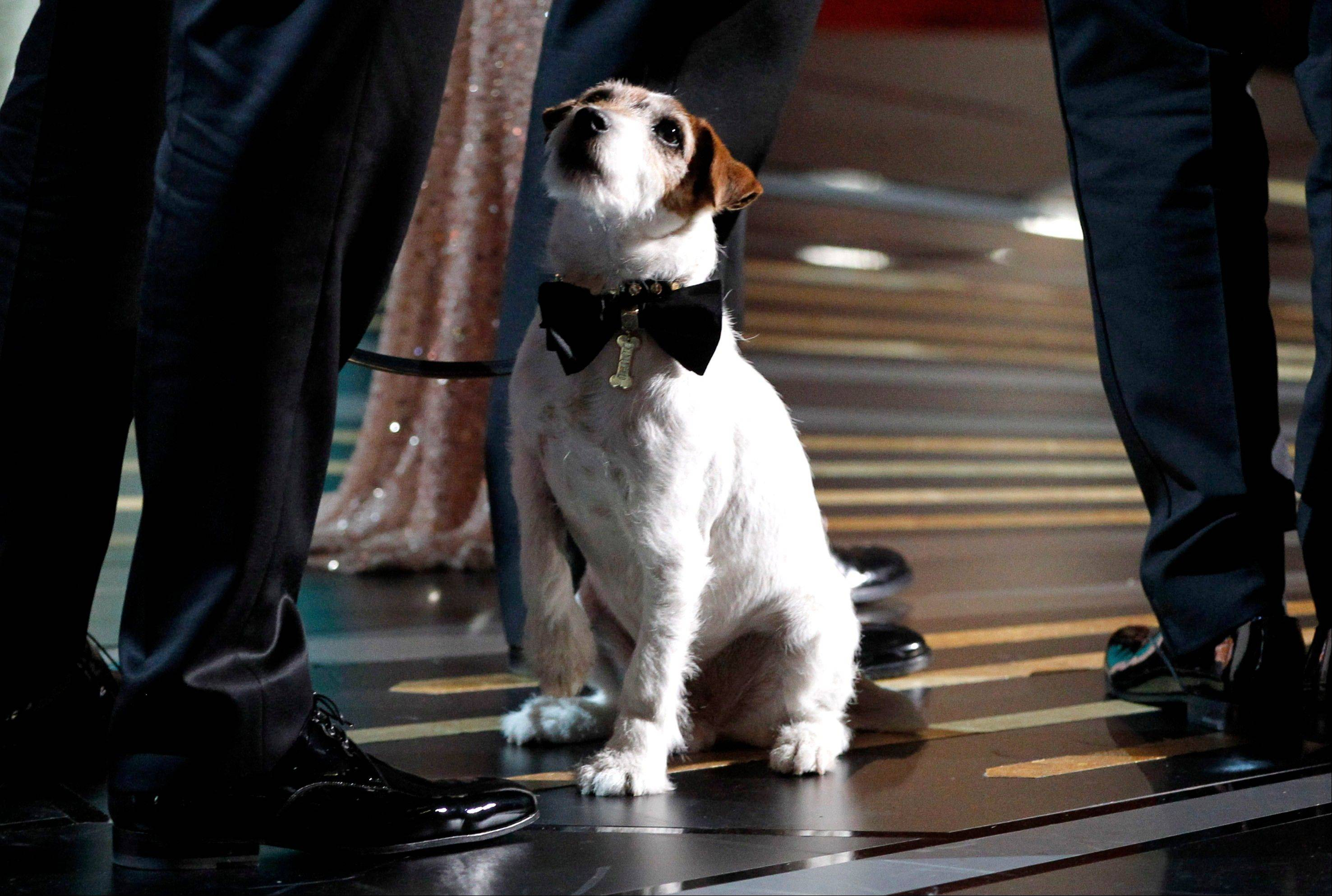 "Uggie, star of ""The Arist,"" is seen onstage at the 84th Academy Awards on Feb. 26 in Los Angeles. Uggie was in Elgin on Sunday to promote his book. He'll stop by Anderson's Bookshop in Naperville at 7 p.m. Monday to ""pawtograph"" copies of his autobiography."