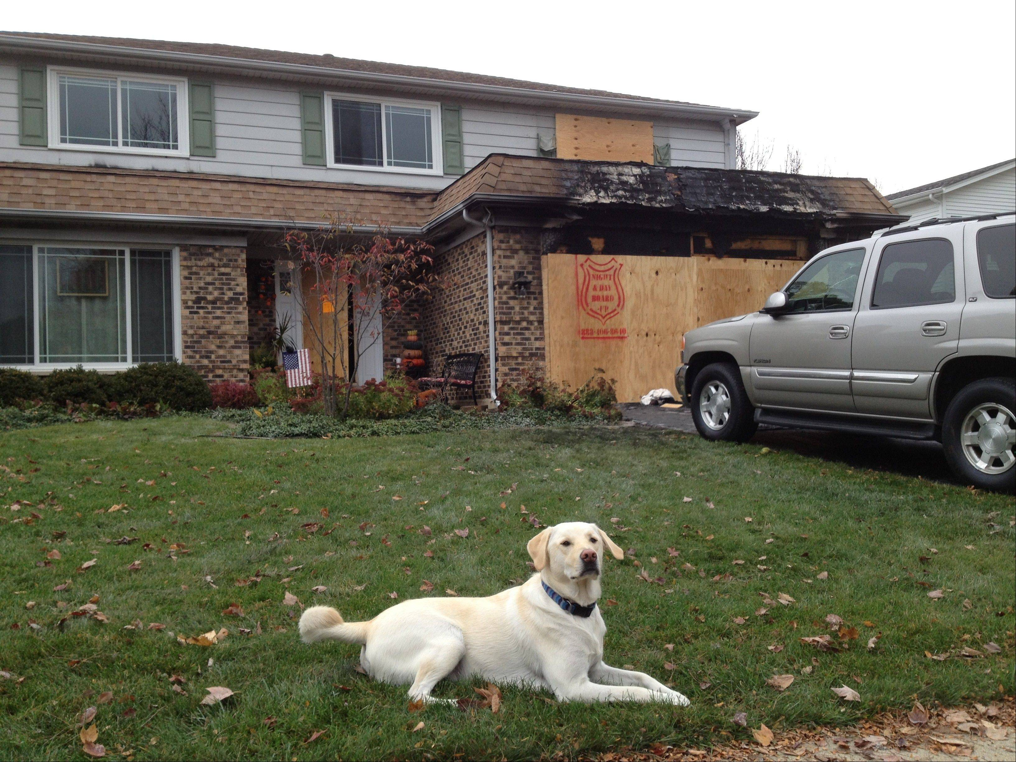 Bo rests in front of the Wacker family's fire-damaged house on Evergreen Court in Palatine Monday morning, only hours after waking everyone up with his barking to alert them of the blaze.