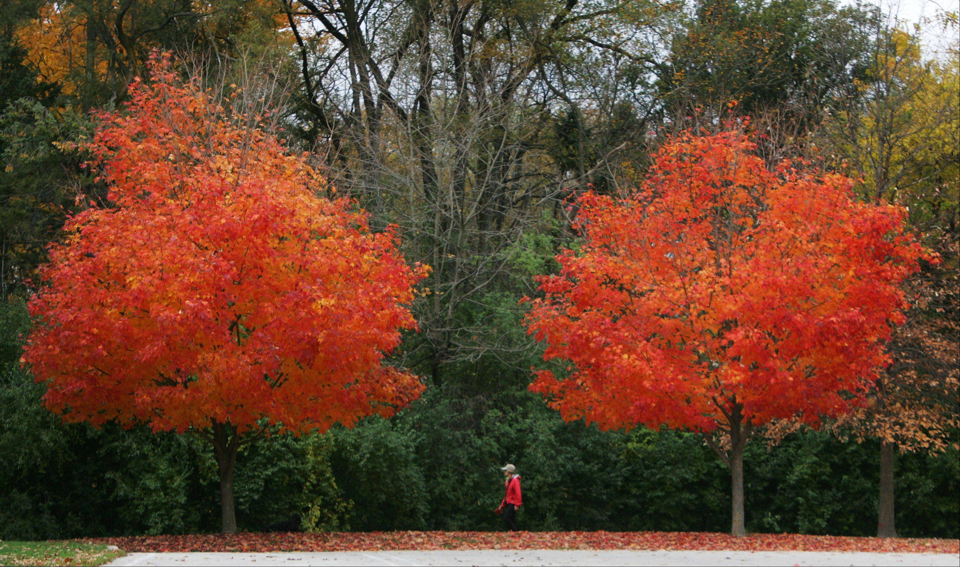 A woman walks her dog along a path in Adler Park in Libertyville. Fall scenes at Adler Park and Independence Grove Forest Preserve in Libertyville for the GLMV chamber guide.