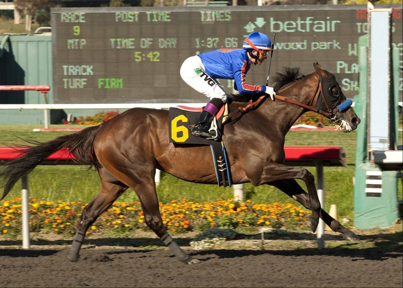 Game On Dude, with jockey Chantal Sutherland, cruises to victory in the $500,000 Hollywood Gold Cup horse race at Betfair Hollywood Park in Inglewood, Calif. Game On Dude is back to take another shot at winning the $5 million Breeders' Cup Classic. He is one of a total of 180 horses, including eight defending or former champions, which were pre-entered Wednesday for the $25 million, 15-race Breeders' Cup world championships at Santa Anita on Nov. 2-3.
