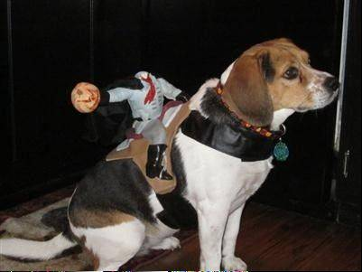 Mia the Beagle Mix from Sleepy Hollow playing the role of the Headless Horseman.