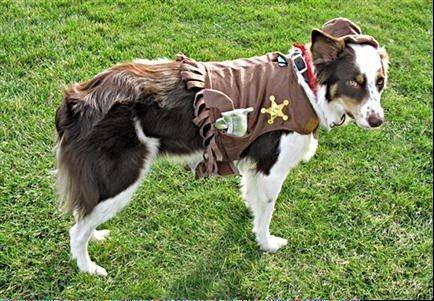 "Wabash is a two-and-a-half-year-old Australian Sheppard/Border Collie mix. This year he's dressing as his favorite Terrytoons cartoon hero -- ""Deputy Dawg"". As you can see he is on duty and ready for action."
