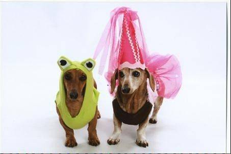 Latte (The Frog) is 4 years old and Neo (The Princess -- only because she puts up with the hat!) is 11 years old. They are miniature dachshunds and best friends!