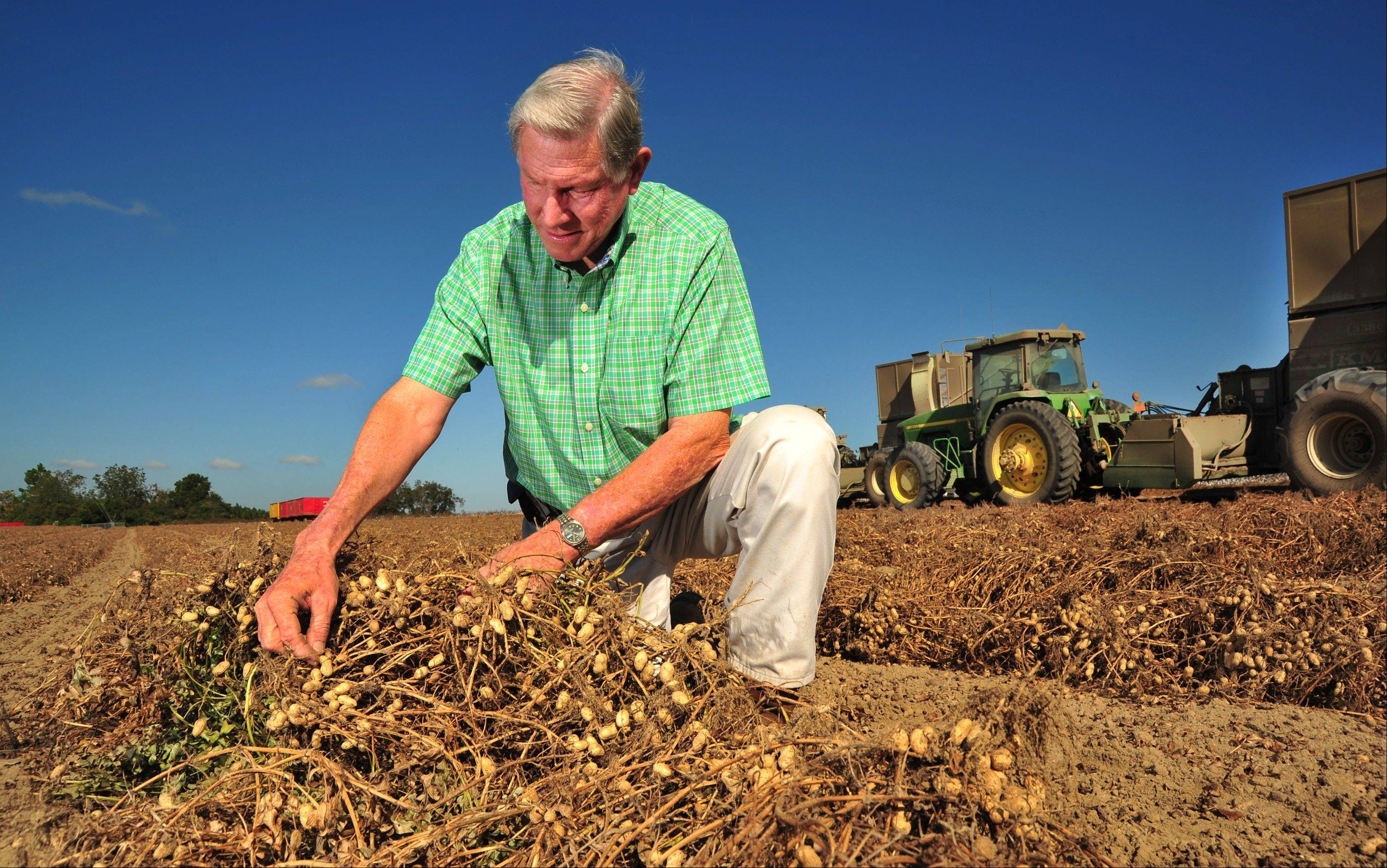 Peanut grower Armond Morris examines peanuts ready for harvest at his Irwinville, Ga., farm .