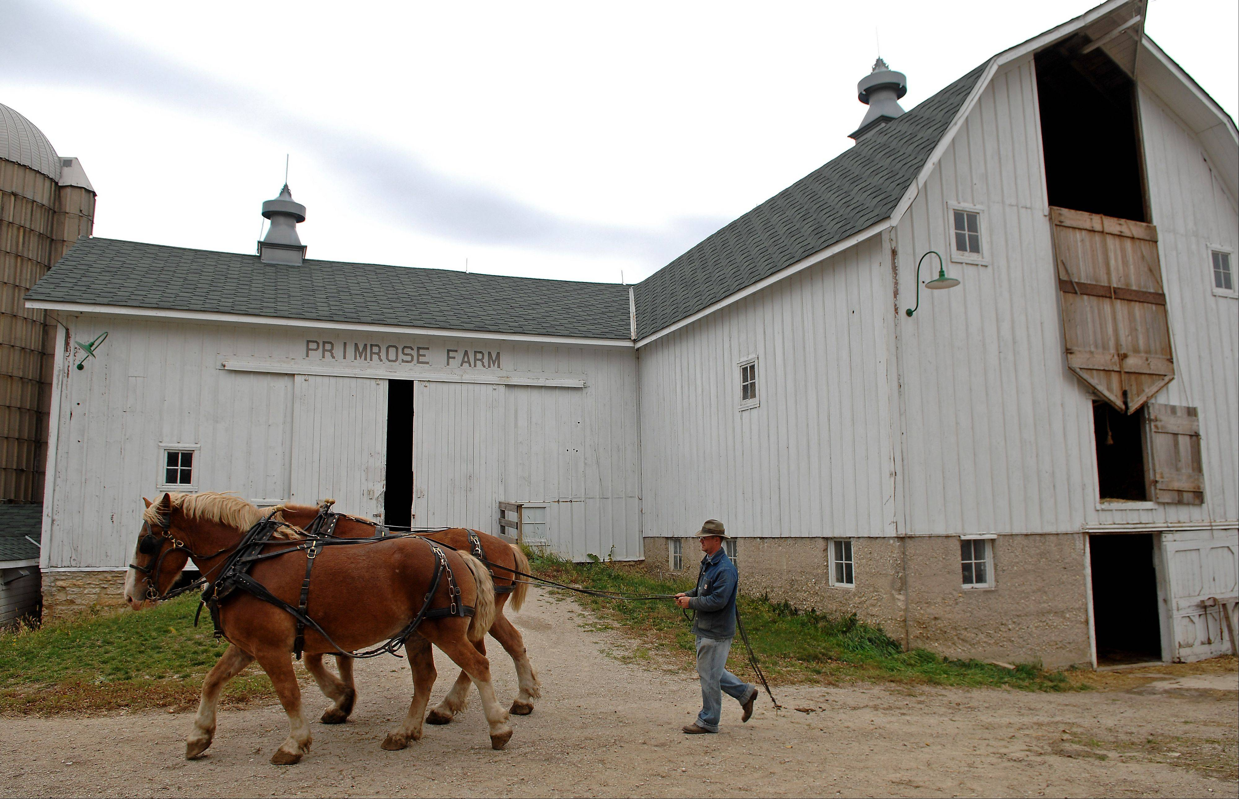 Living history farmer Jon Kuester takes the horses out to work in the field at Primrose Farm in St. Charles.