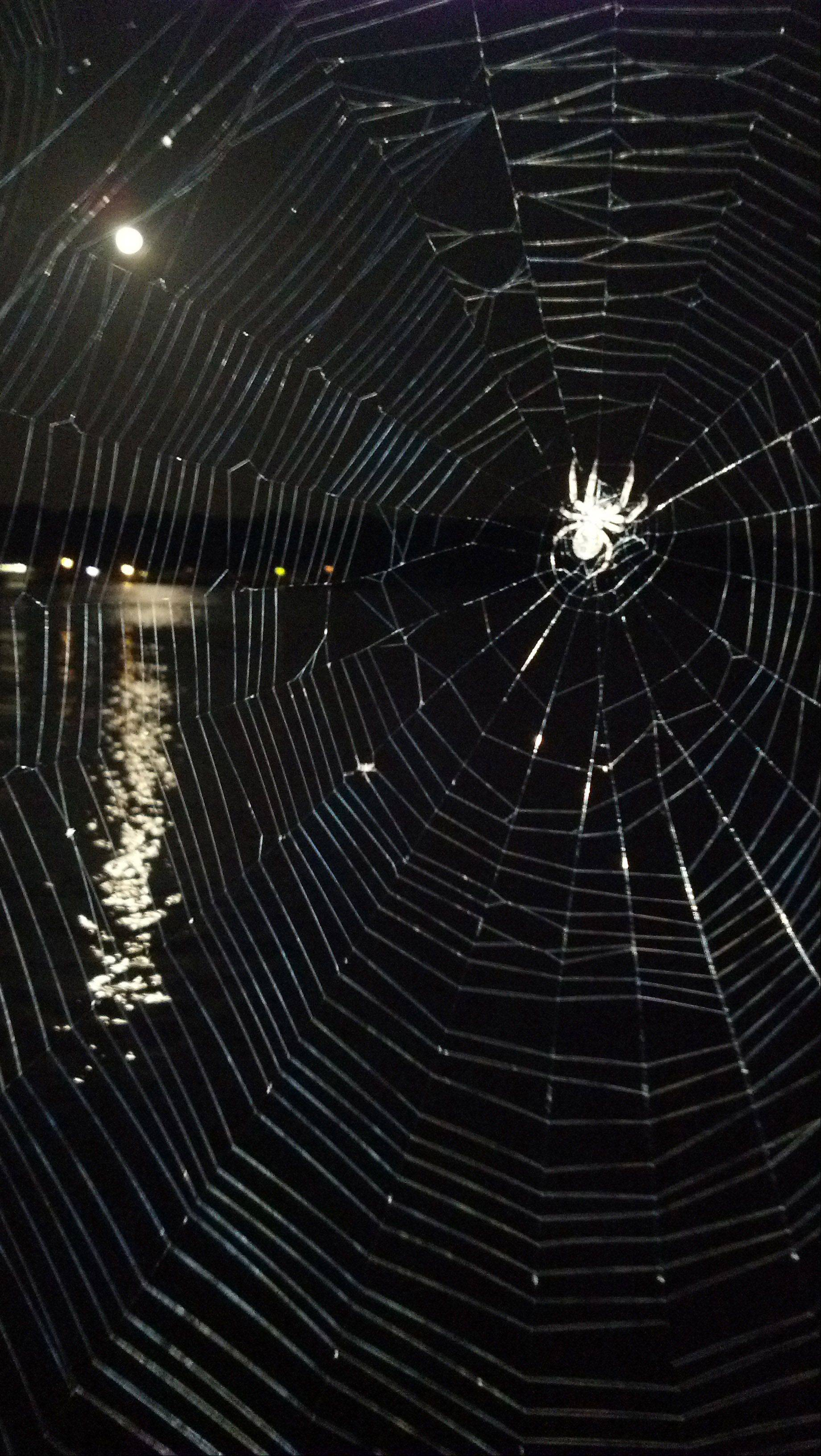 A spider reclines in a wonderfully spun web, basking in the moonlit sky, on the Fourth of July in Branson, Missouri.