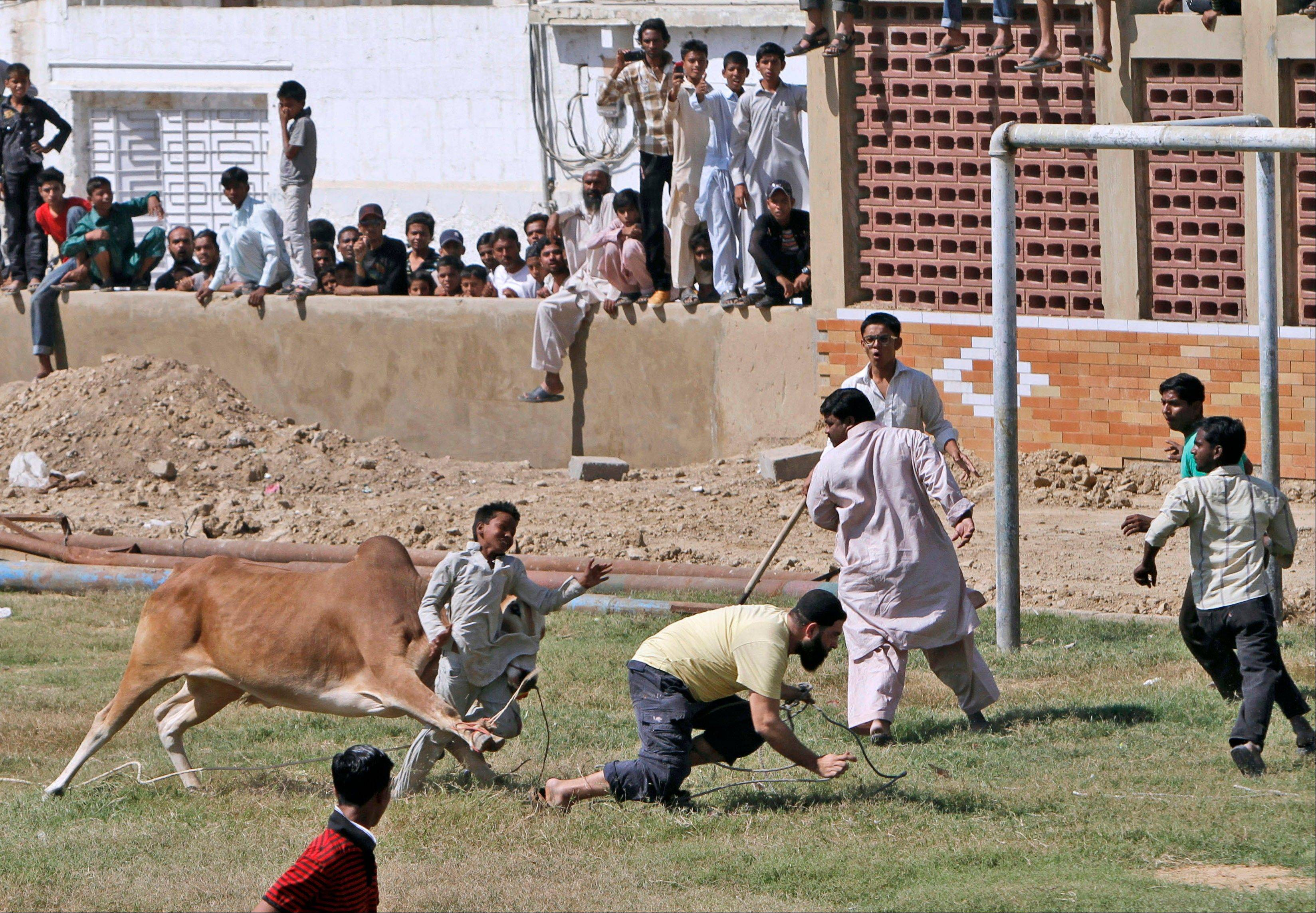 "A bull attacks a boy after running away Saturday from Pakistani butchers trying to slaughter it, on the first day of the Muslim holiday of Eid al-Adha, or ""Feast of Sacrifice,"" in Karachi, Pakistan. The boy was slightly injured according to the photographer."