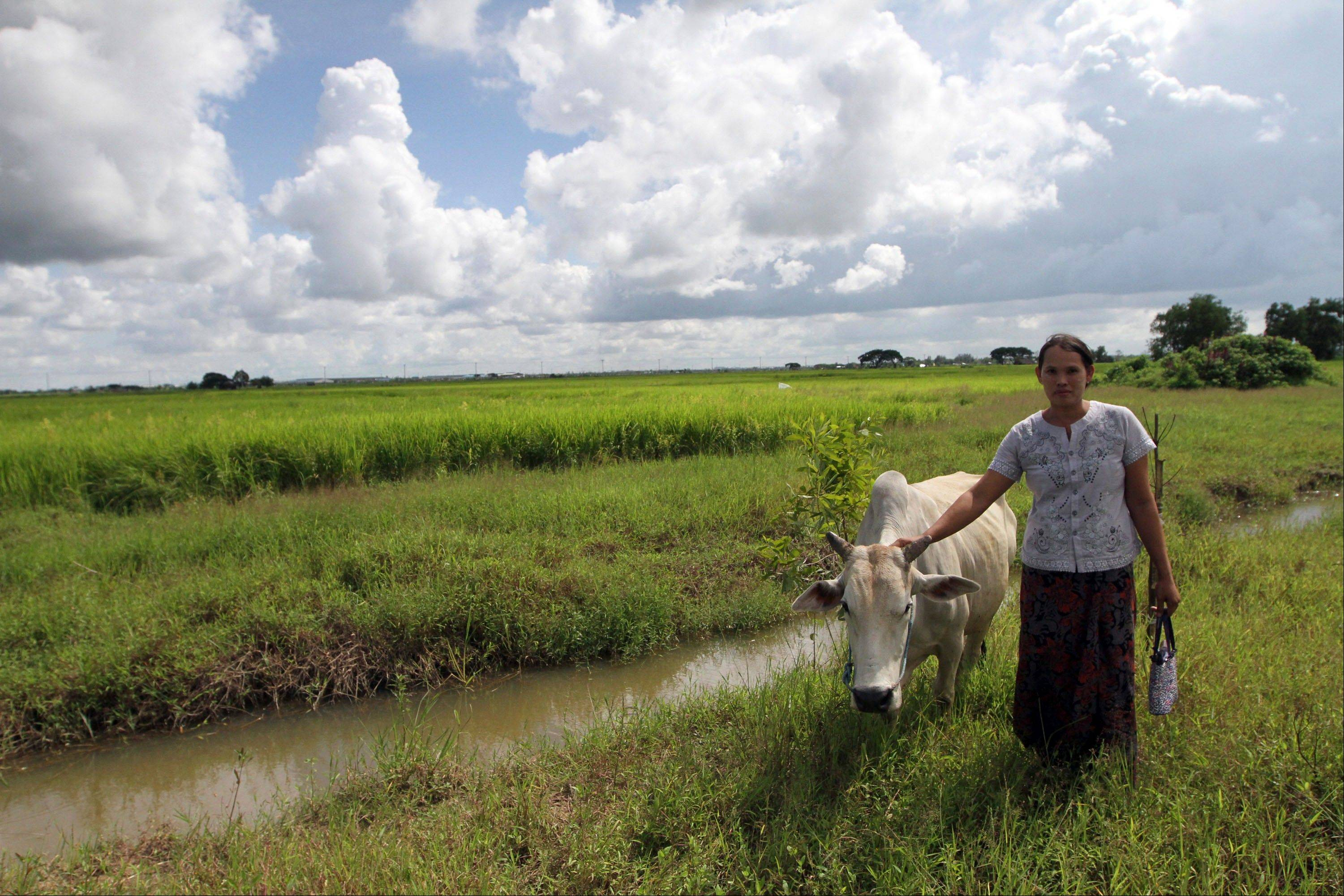 Hnin Nandar stands along with her cow near her farmland at Mingaladon township, northern outskirts of Yangon, Myanmar. The landscape of Mingaladon township tells a story of economic upheaval. Skeletons of factories for a new industrial zone rise from thick green rice paddies local farmers say were seized illegally by the Zaykabar Company, one of Myanmar's most powerful companies. Human rights groups say land battles could intensify because companies tied to the military and business elite are rushing to grab land as the country emerges from five decades of isolation and opens its economy.