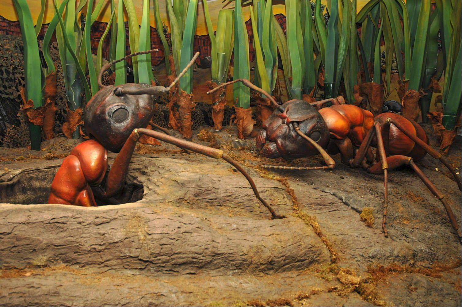 Huge carpenter ants pop out of tunnels as part of the Backyard Monsters exhibit at the Peggy Notebaert Nature Museum.