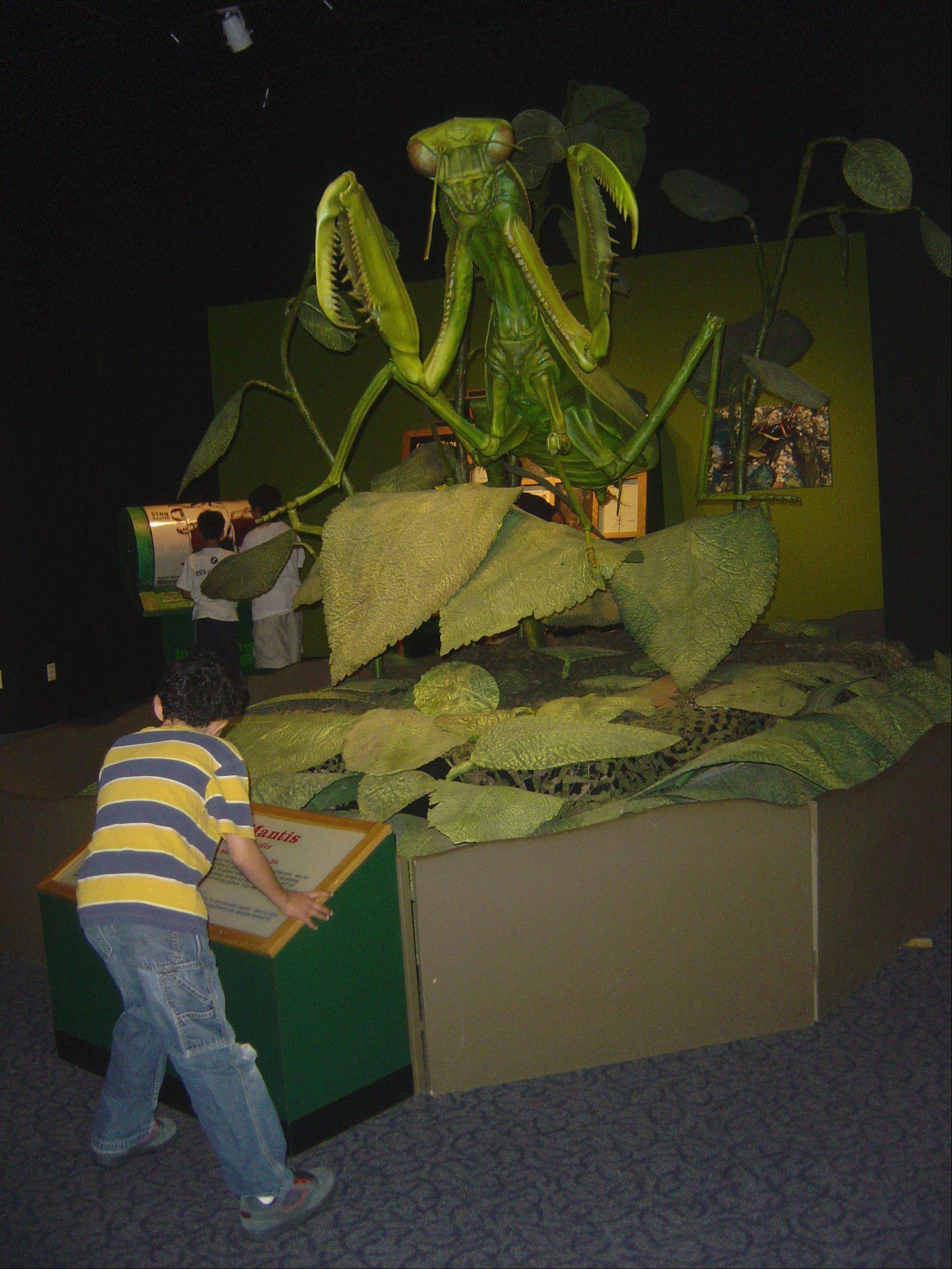 A praying mantis is one of the giant animatronic creatures found in the Backyard Monsters exhibit at the Peggy Notebaert Nature Museum.