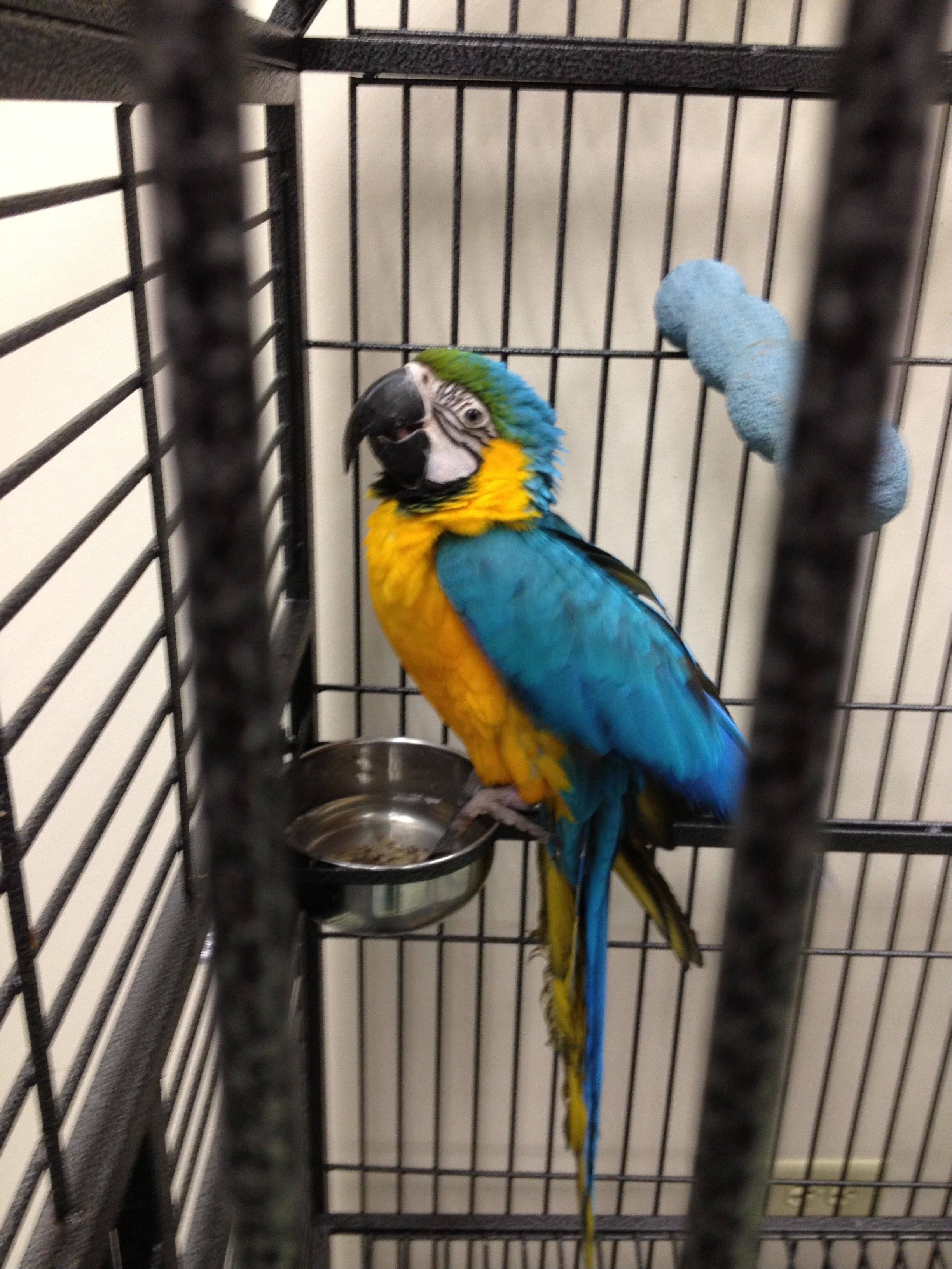This bird was among 55 living birds, 19 living dogs, 11 living cats, three living rabbits and three dead animals found in a Woodstock-area home whose owner had not been seen in weeks, authorities said Tuesday.