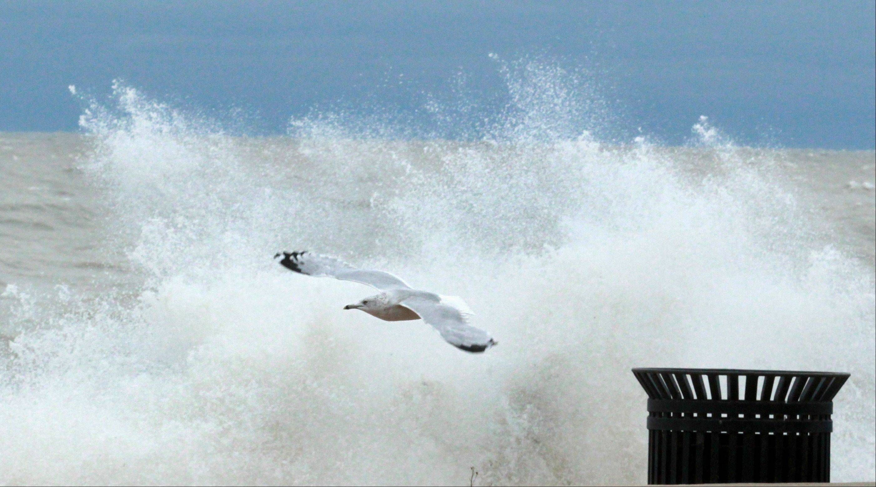 A seagull battles the wind near Sydney R. Marovitz Golf Course as giant waves batter Lake Michigan shoreline in Chicago on Tuesday, October 30.