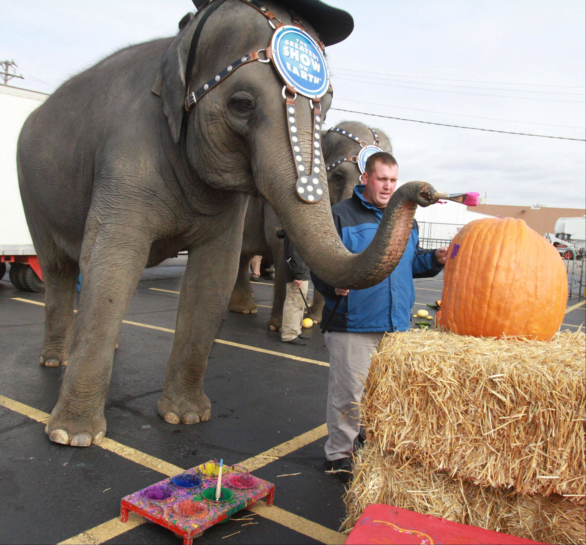 Ringling Brothers and Barnum and Bailey Circus Asian elephant Kelly Ann paints a pumpkin Wednesday with instructions from Joey Frisco, senior elephant trainer, to kick off the arrival of the circus at the Allstate Arena in Rosemont. The circus will perform there Thursday through Nov. 11.