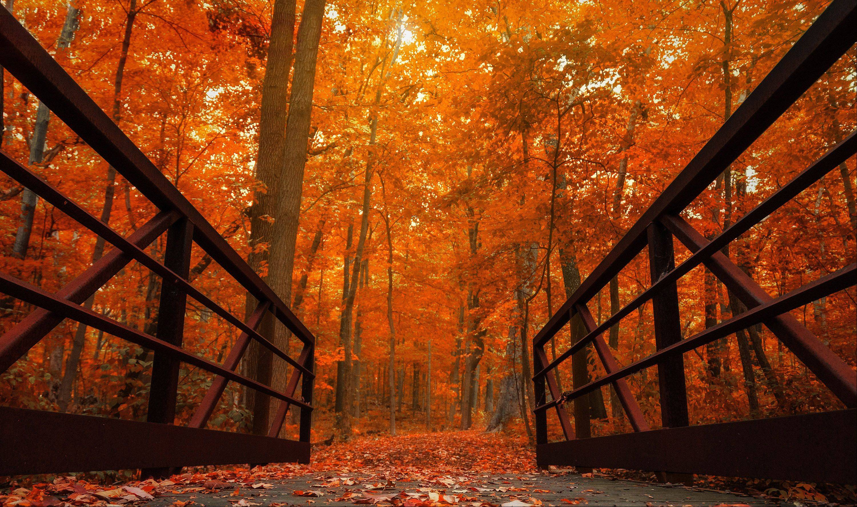This photo was taken at the Morton Arboretum in Lisle. The bridge and fall colors came together to create a surreal scene.
