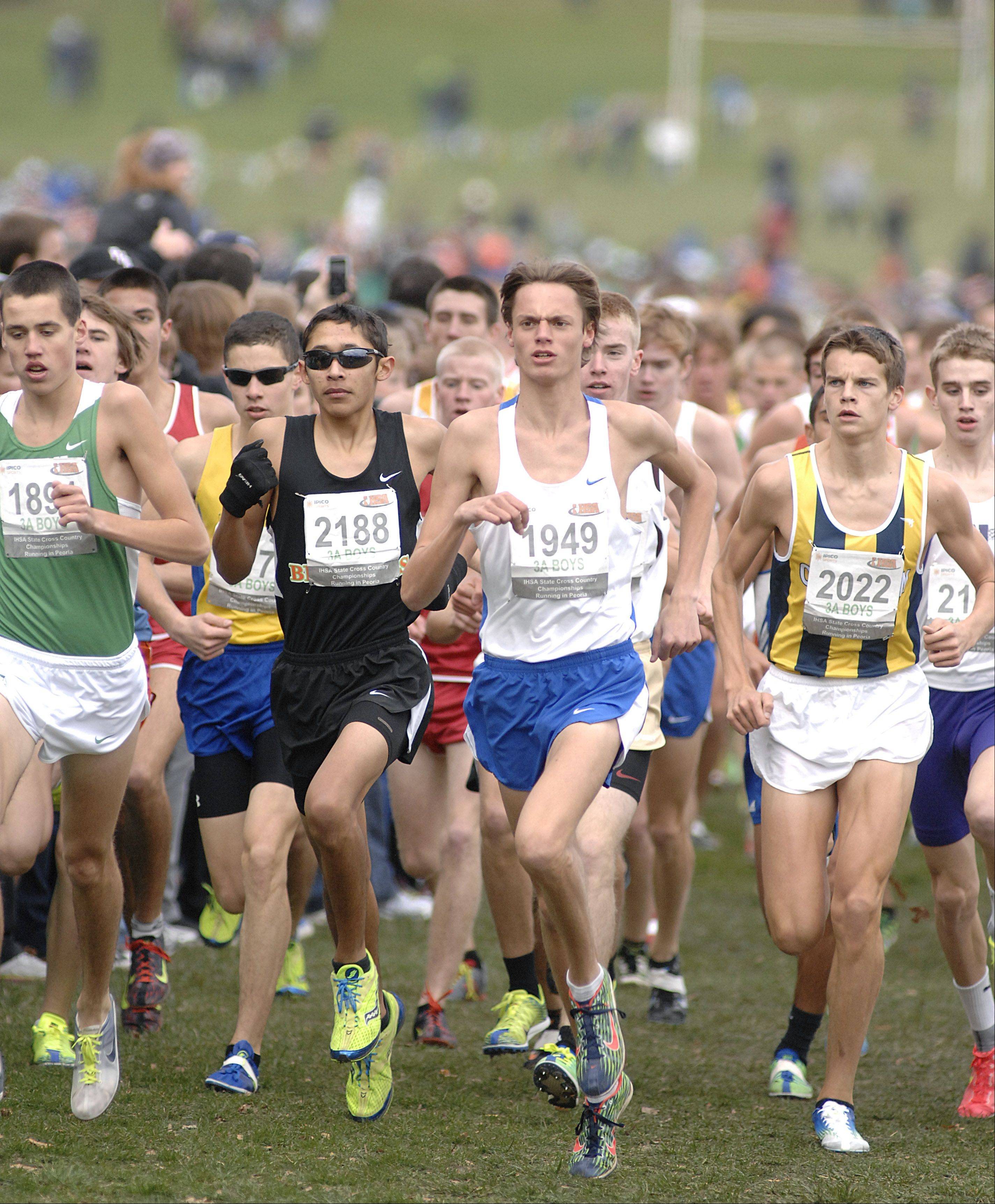 Laura Stoecker/lstoecker@dailyherald.com Lake Zurich's Alex Milner (1949) leads the pack in the state cross country 3A final in Peoria on Saturday, November 3.