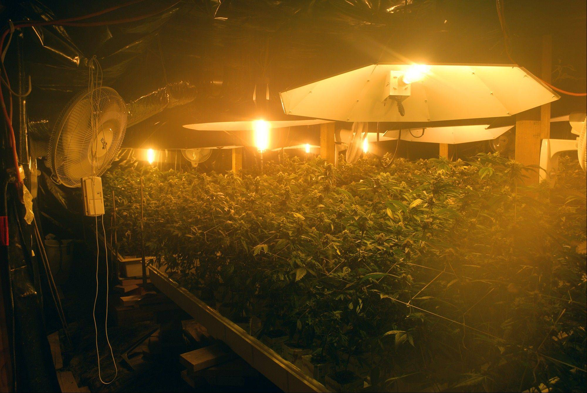 An indoor marijuana growing operation was photpgraphed after being raided by police. Fed up with the proliferation of industrial-scale indoor growing operations taking over homes in residential neighborhoods, city leaders are asking voters to to adopt a stiff new tax on excessive electricity use designed to drive large-scale growers out of town.