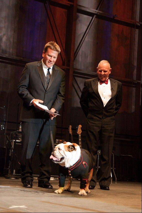 This Saturday, Oct. 27, 2012, photo provided by Natural Balance and Thedogphotographer.com shows the bulldog, Tillman, being inducted as an honorary Marine, Private 1st Class, with his trainer, Ron Davis, left, and Sergeant Major Gene Overstreet, on stage at Sky Ball in the American Airlines Hangar at the Dallas/Fort Worth International Airport in Dallas.