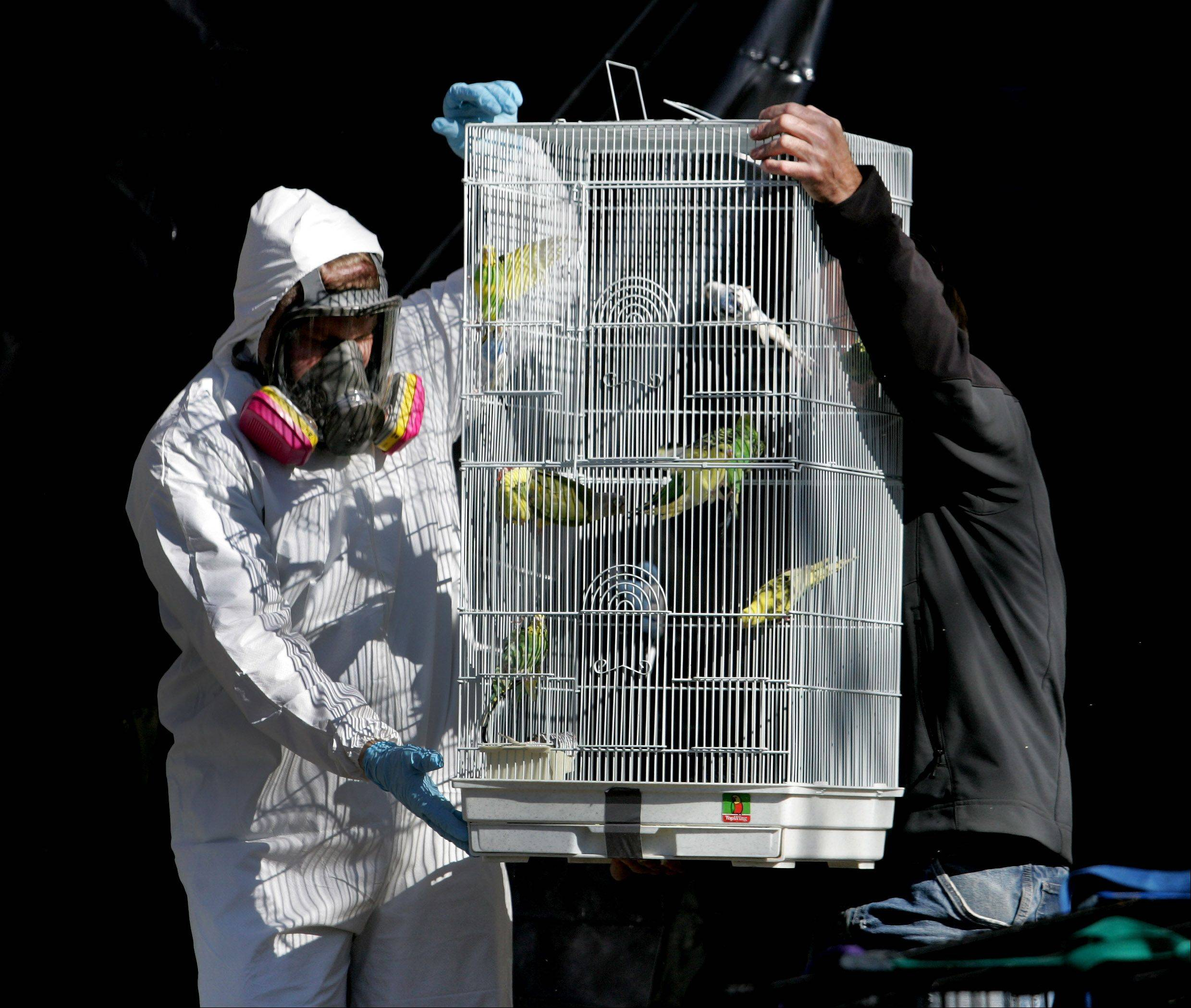 A cage of birds are taken out of the house of Dave Skeberdis of Aurora on Friday.