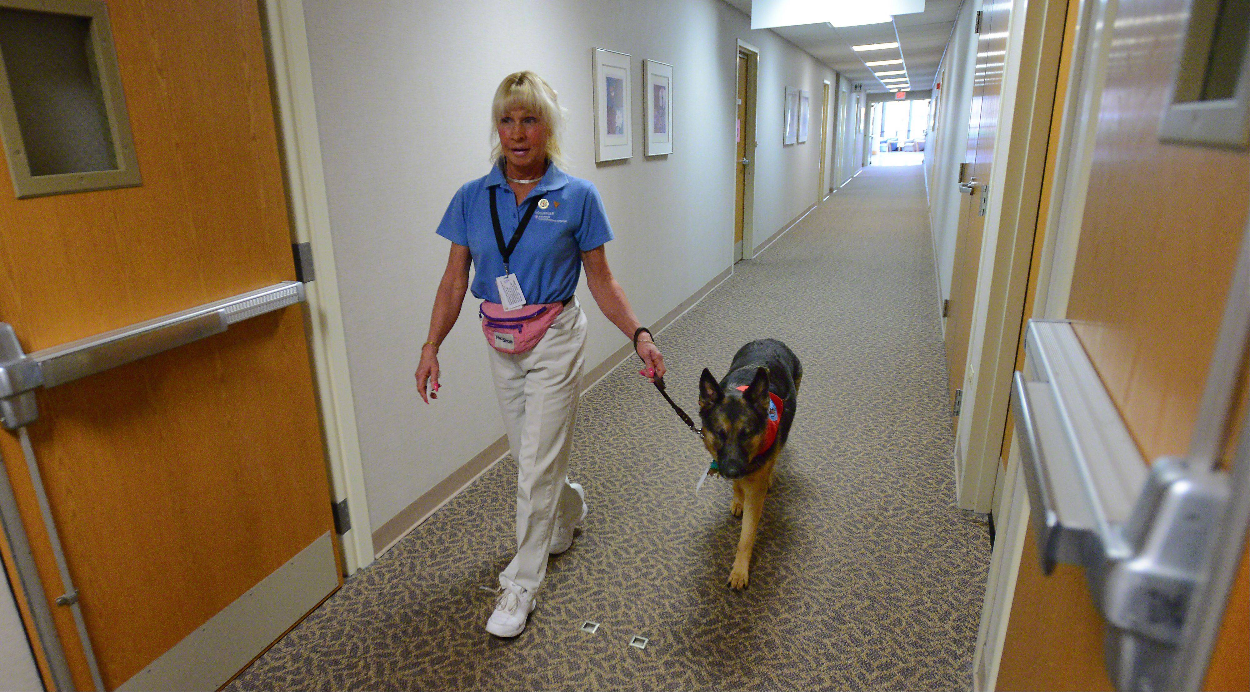 Jessie is led through Advocate Good Shepherd Hospital in Barrington by owner Linda McCarthy.
