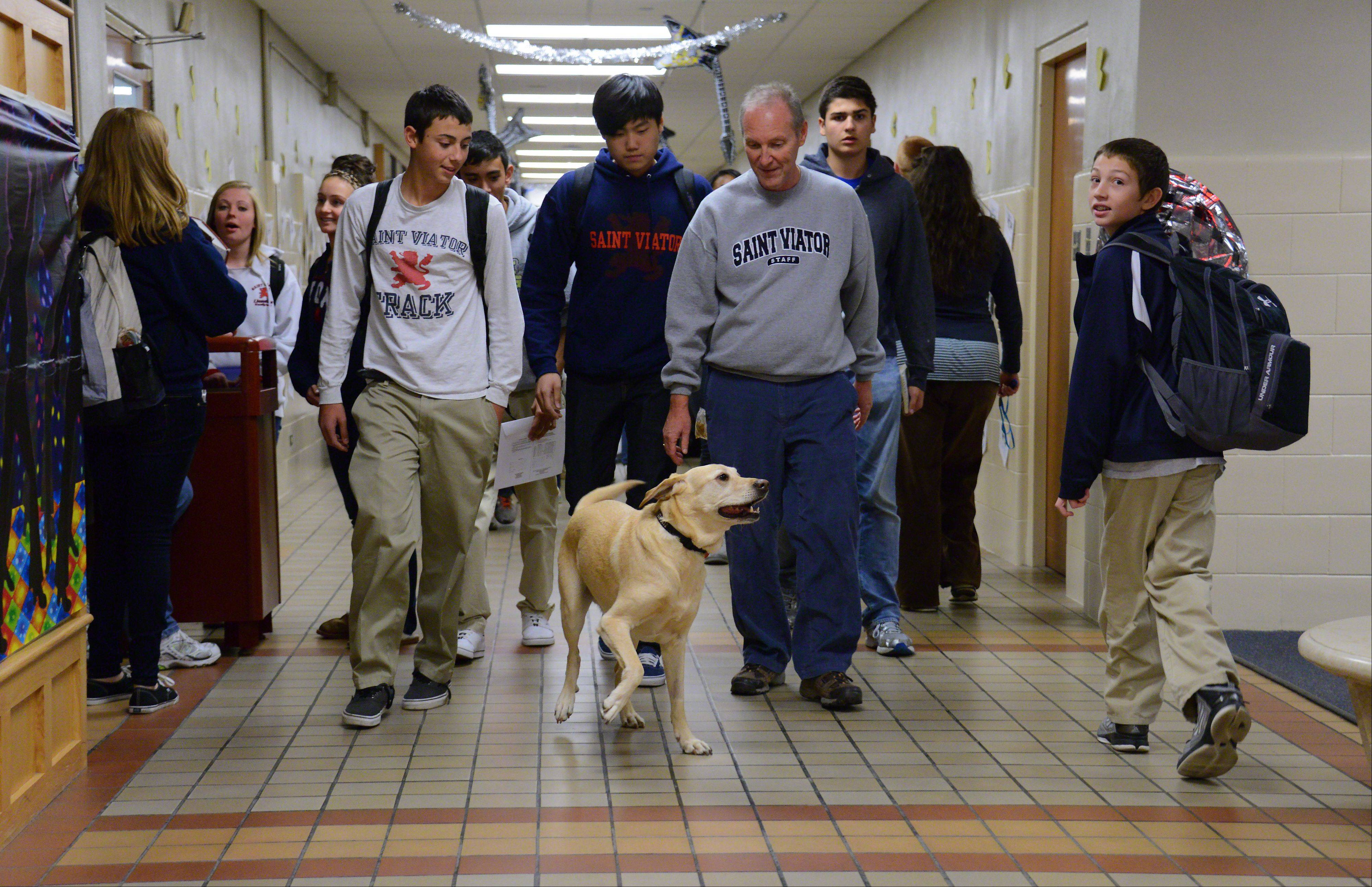 Archie gets all of the attention as Brother Rob Robertson walks him through the hall one afternoon after class at St. Viator High School.