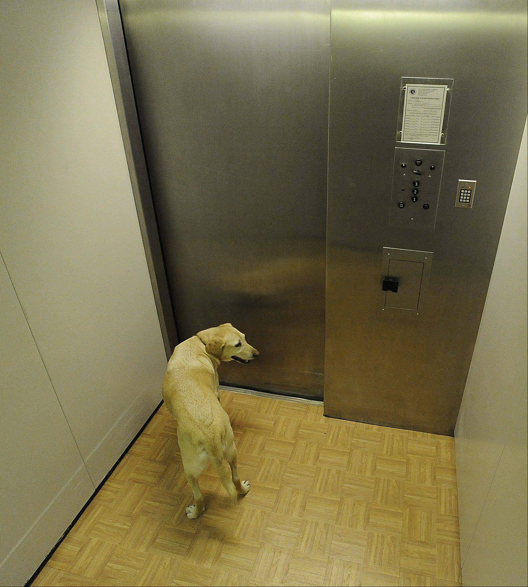 Archie looks around the elevator as he heads by himself to the third floor living quarters, something he does every day of the week.