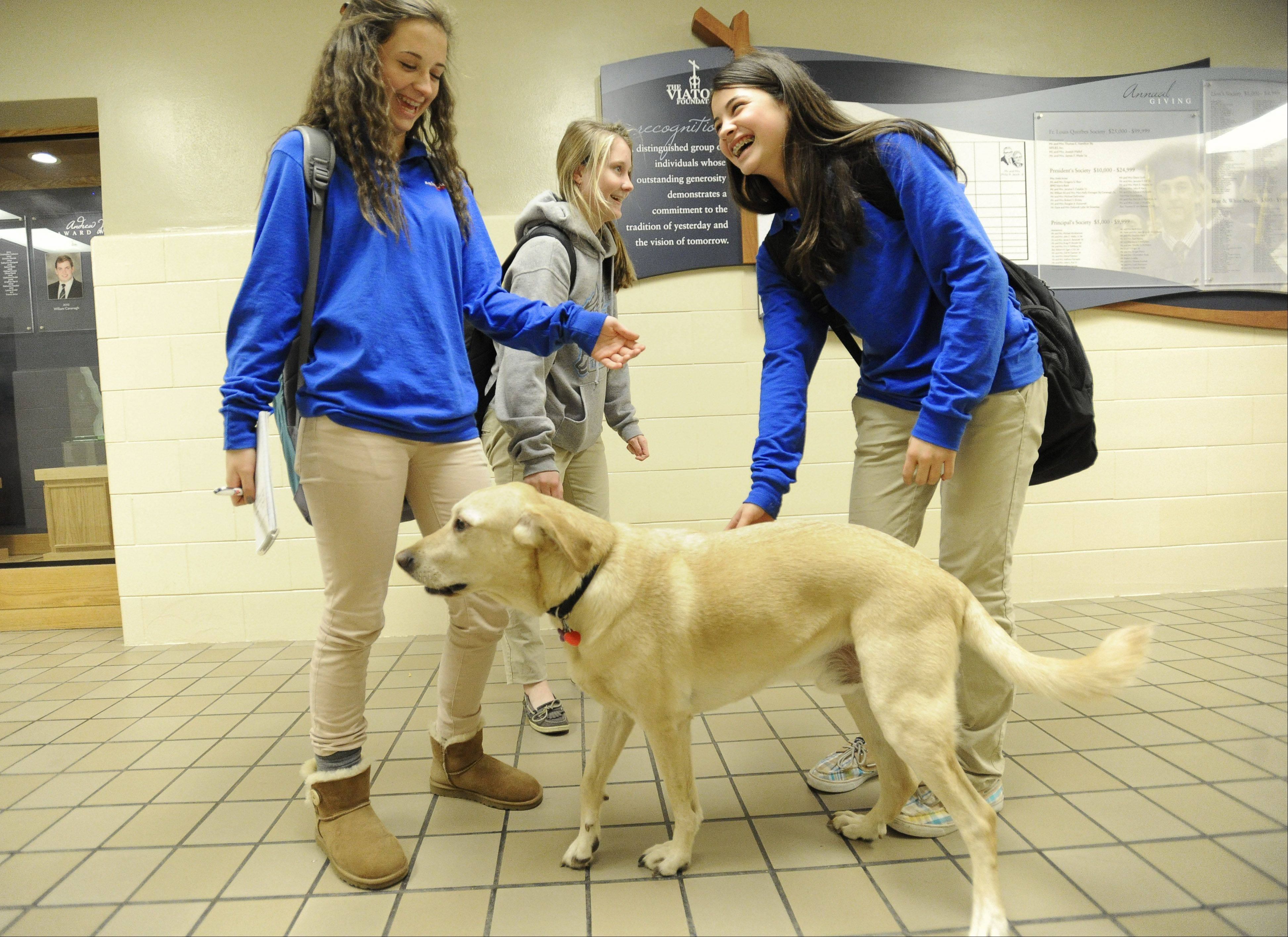 Freshmen Gianna Parise, right, and Delia Douglas have big smiles on their faces as they meet Archie in the hallway of St. Viator High School.