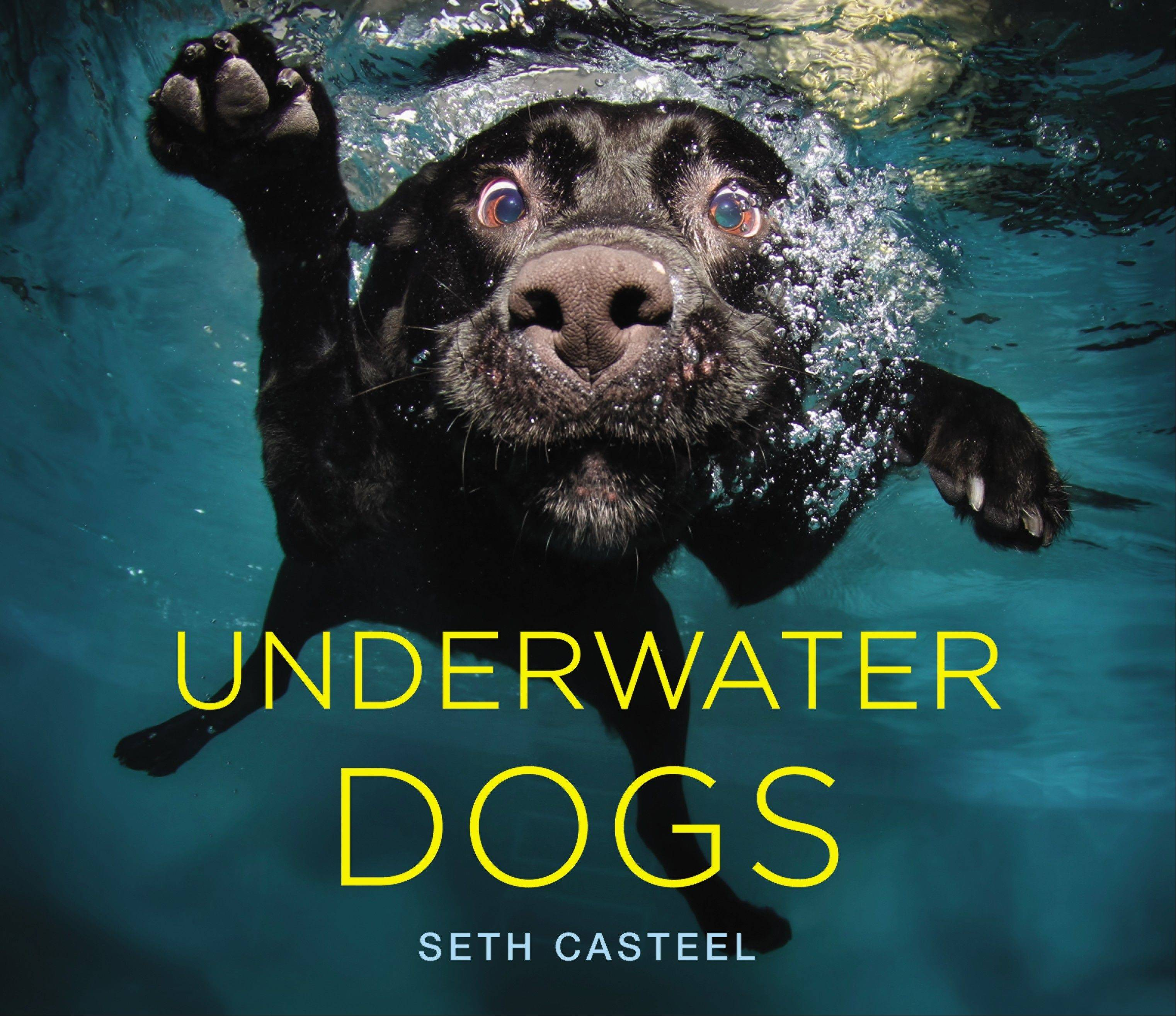This January 2012 photo provided by photographer Seth Casteel shows Duchess on the cover of his photo book 'Underwater Dogs' taken in Chicago.
